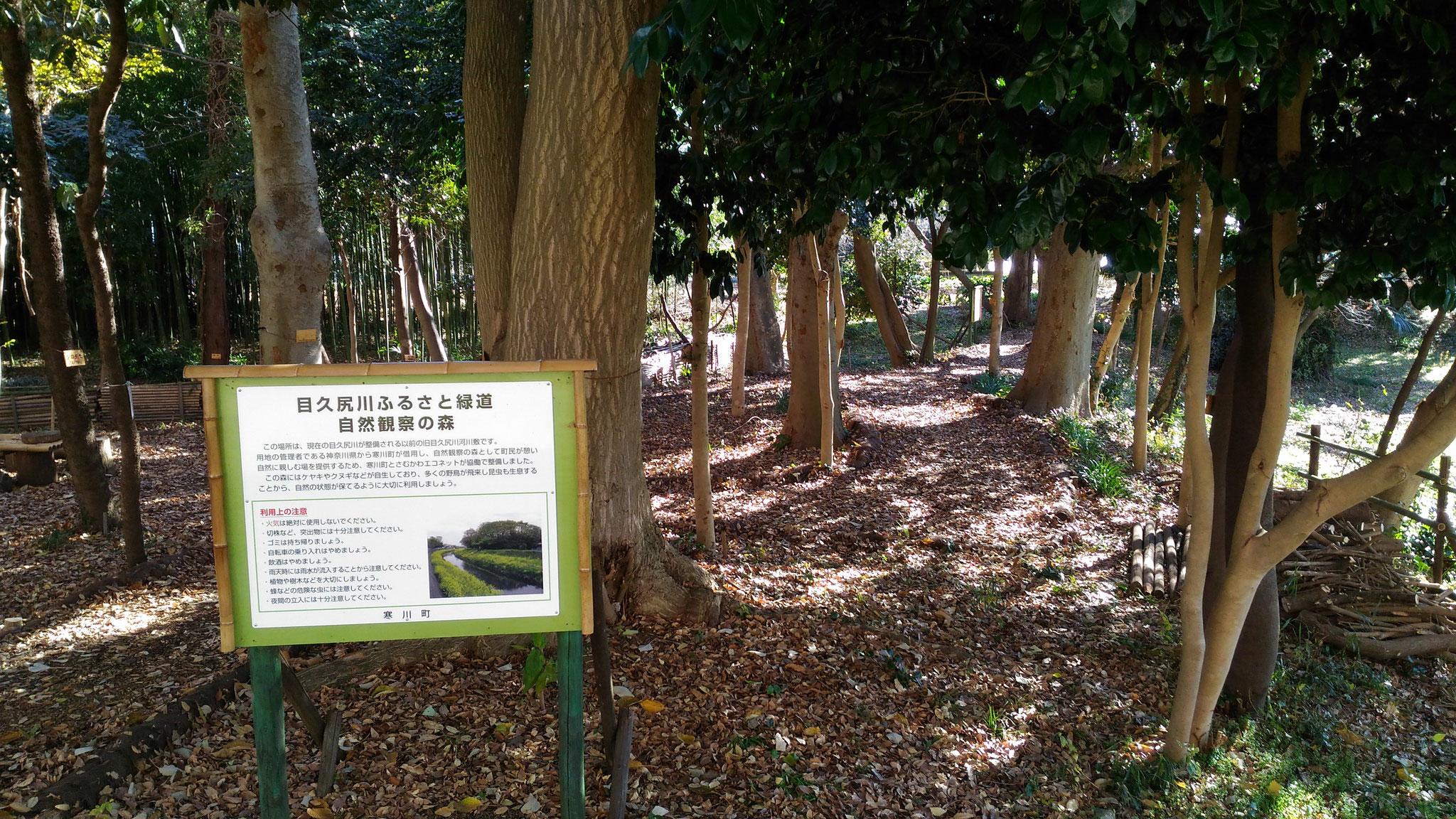 整備した自然観察の森(けやきの森)1