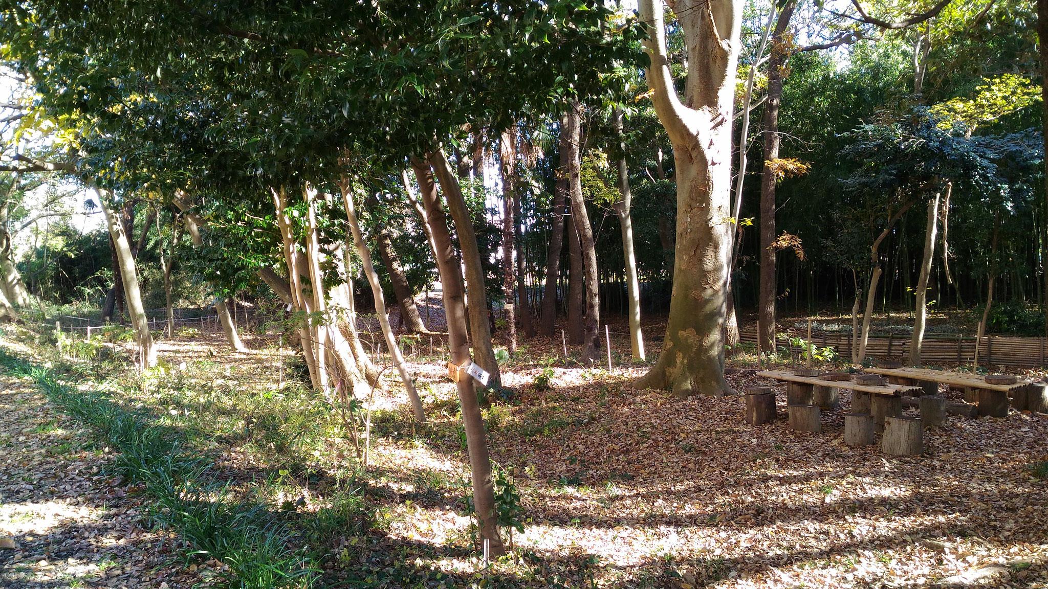 整備した自然観察の森(けやきの森)2