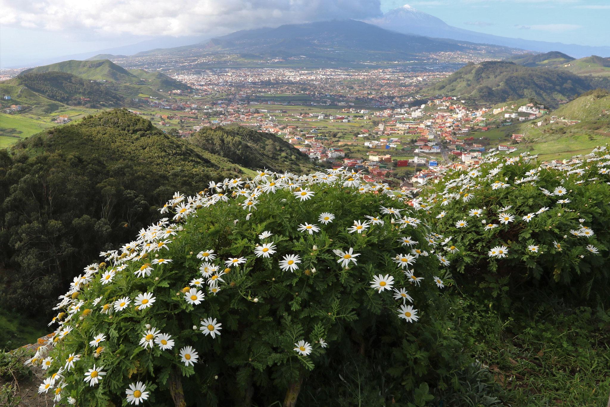 Aussichtspunkt Mirador Cruz del Carmen (Anaga-Gebirge) - Blick nach La Laguna