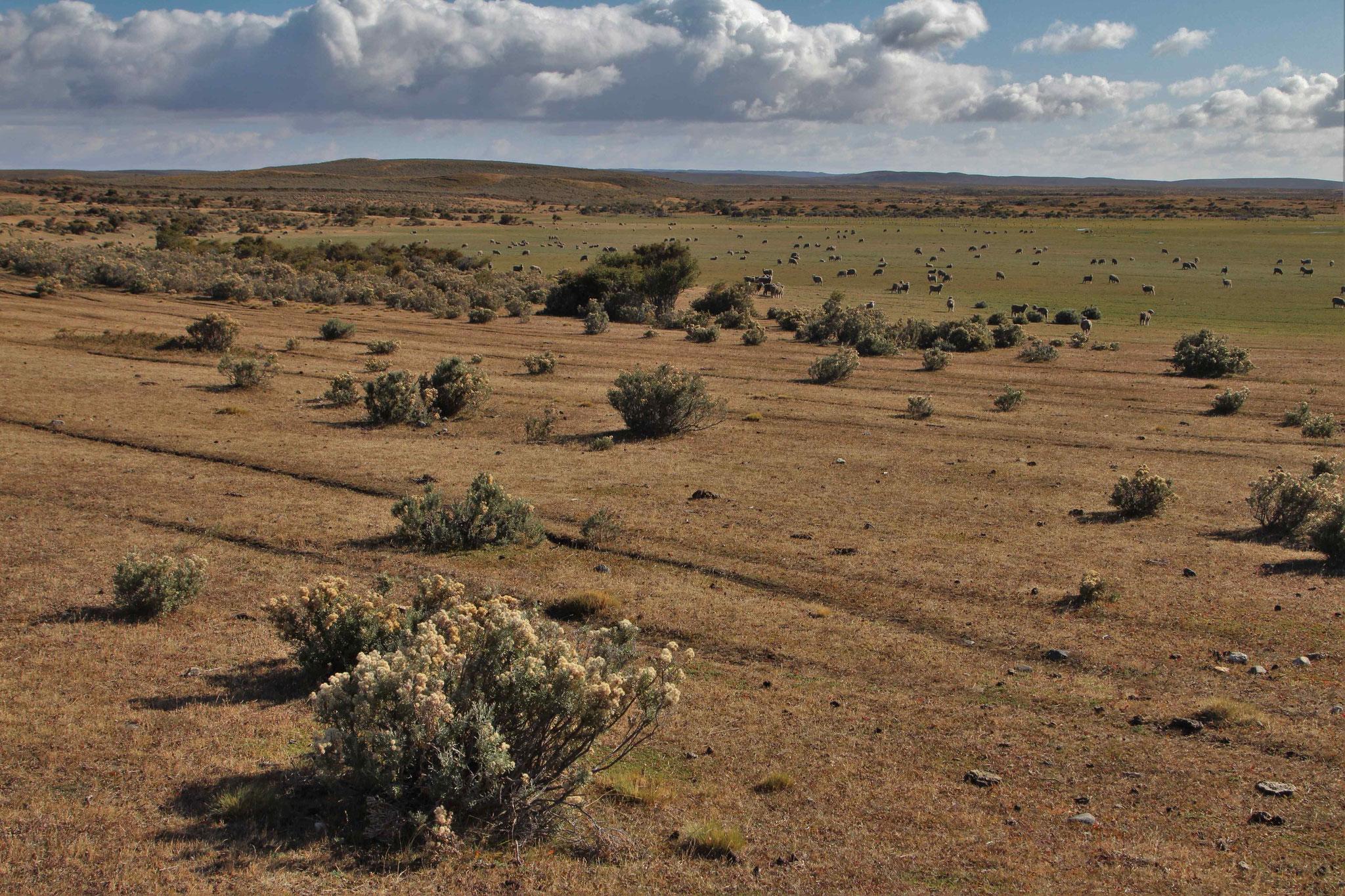 Landschaft bei Punta Arenas