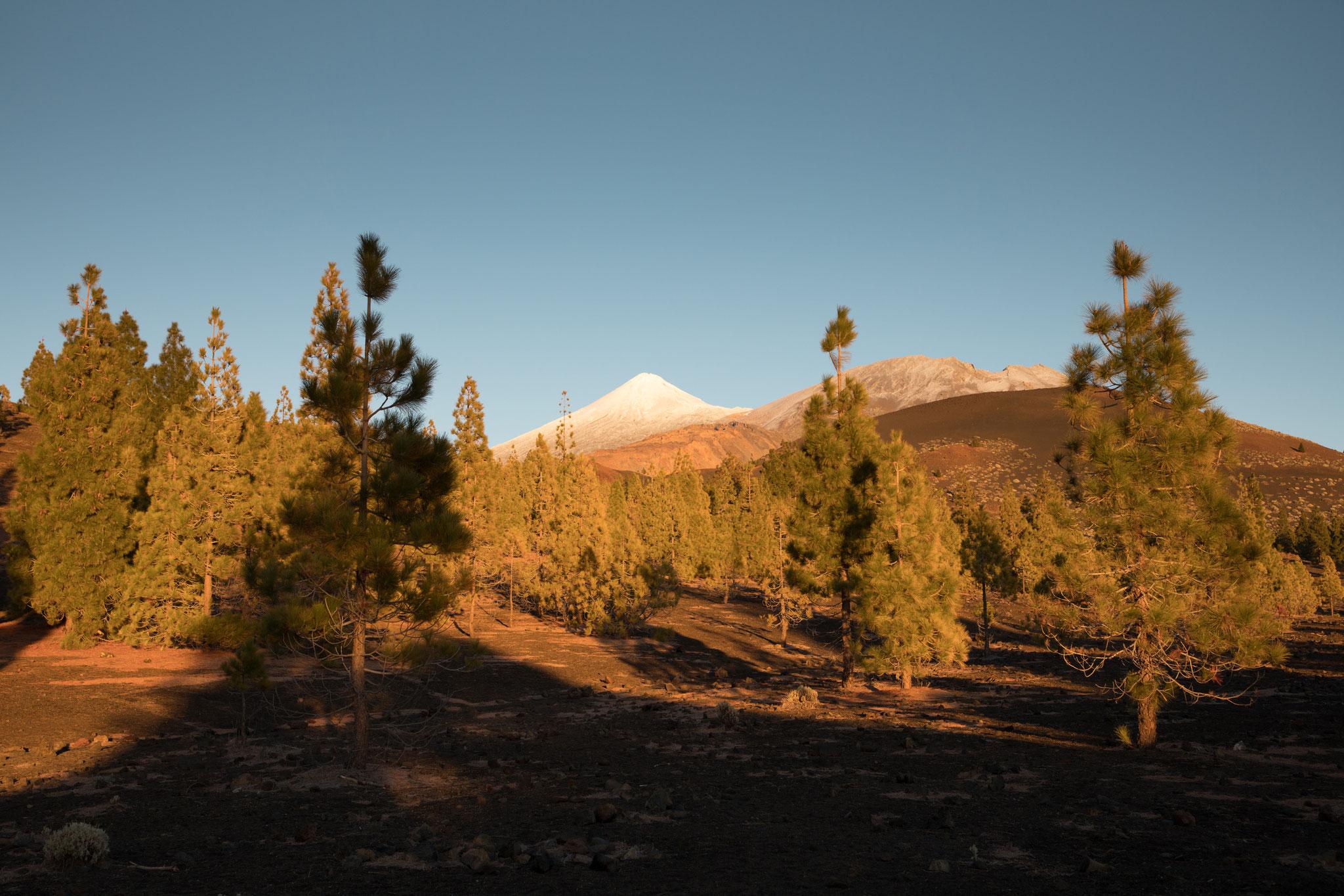 Blick vom Mirador Sámara zum Teide