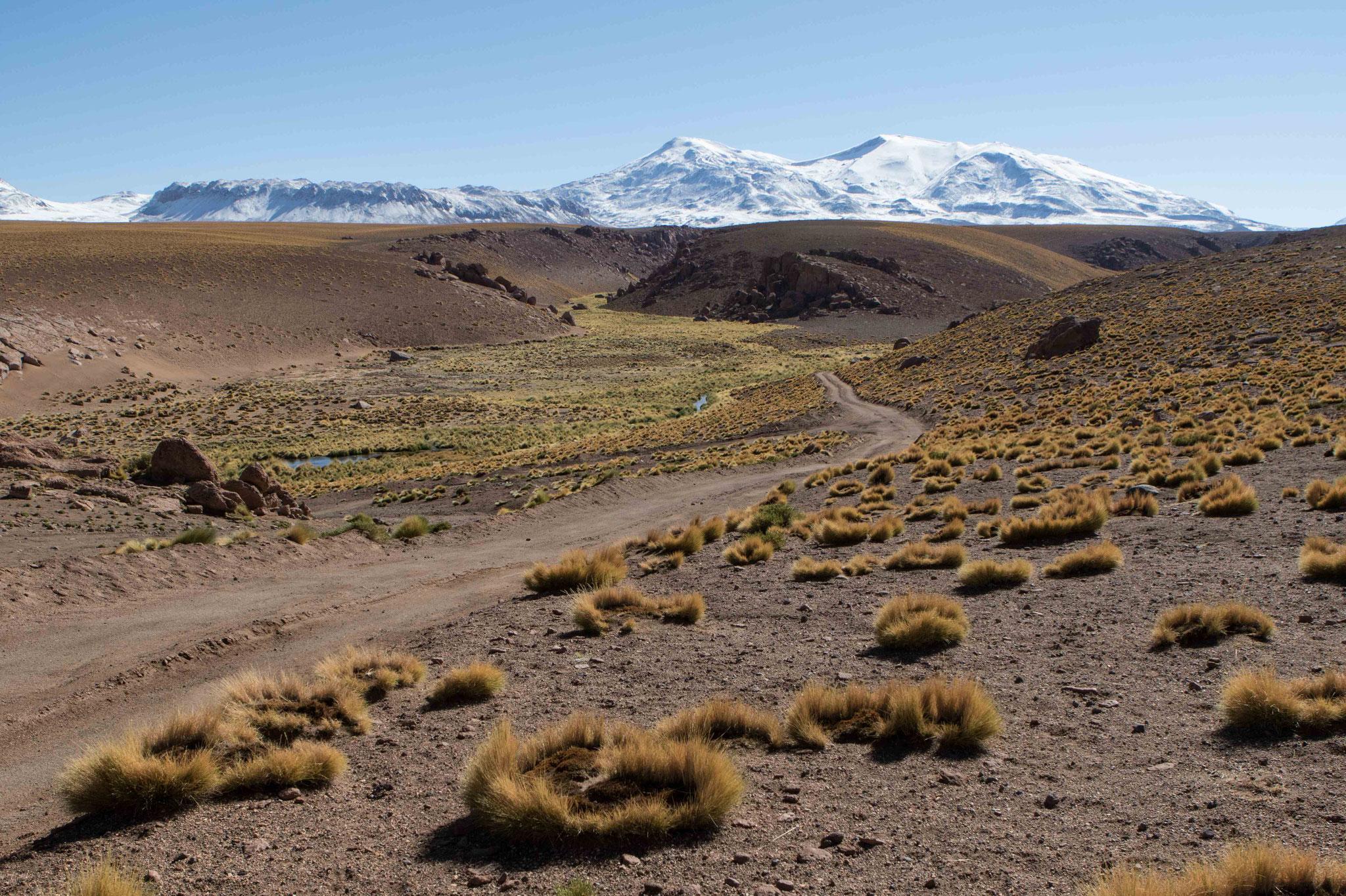 Hochland zwischen El Tatio und San Pedro