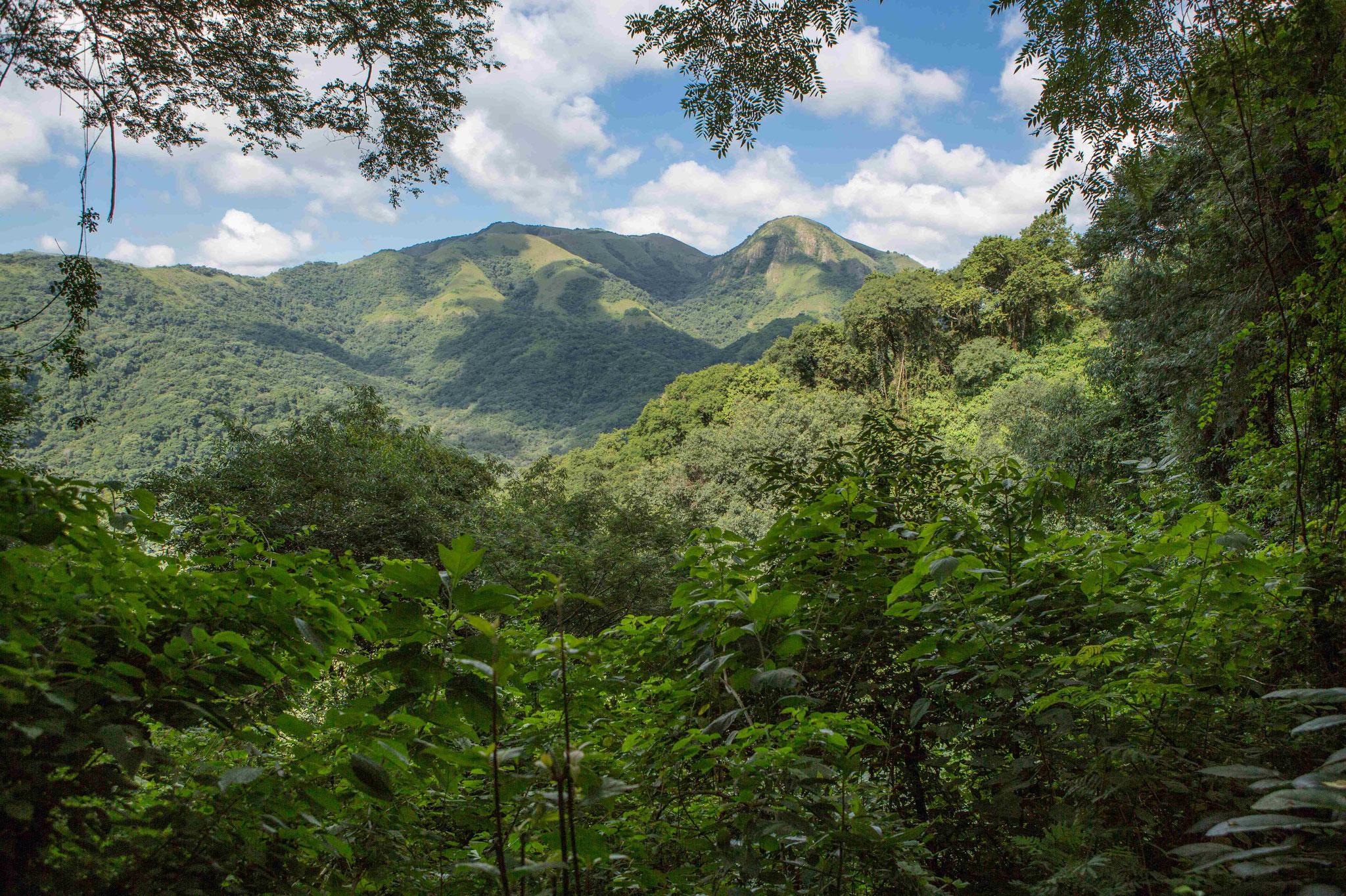 Tropische Wälder zwischen Salta und Purmamarca