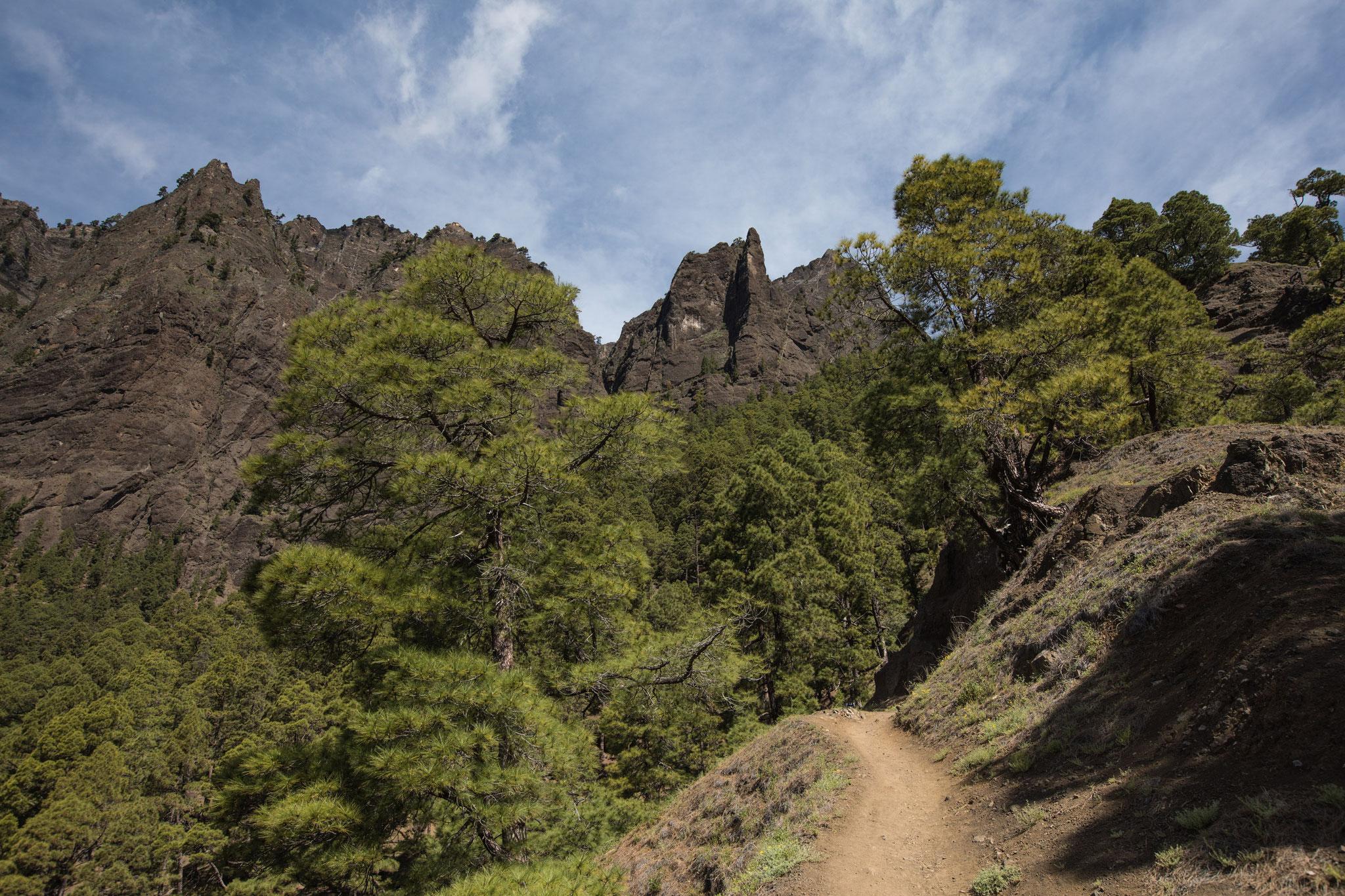 Wanderung vom Mirador Los Brecios in den Barranco de las Angustias