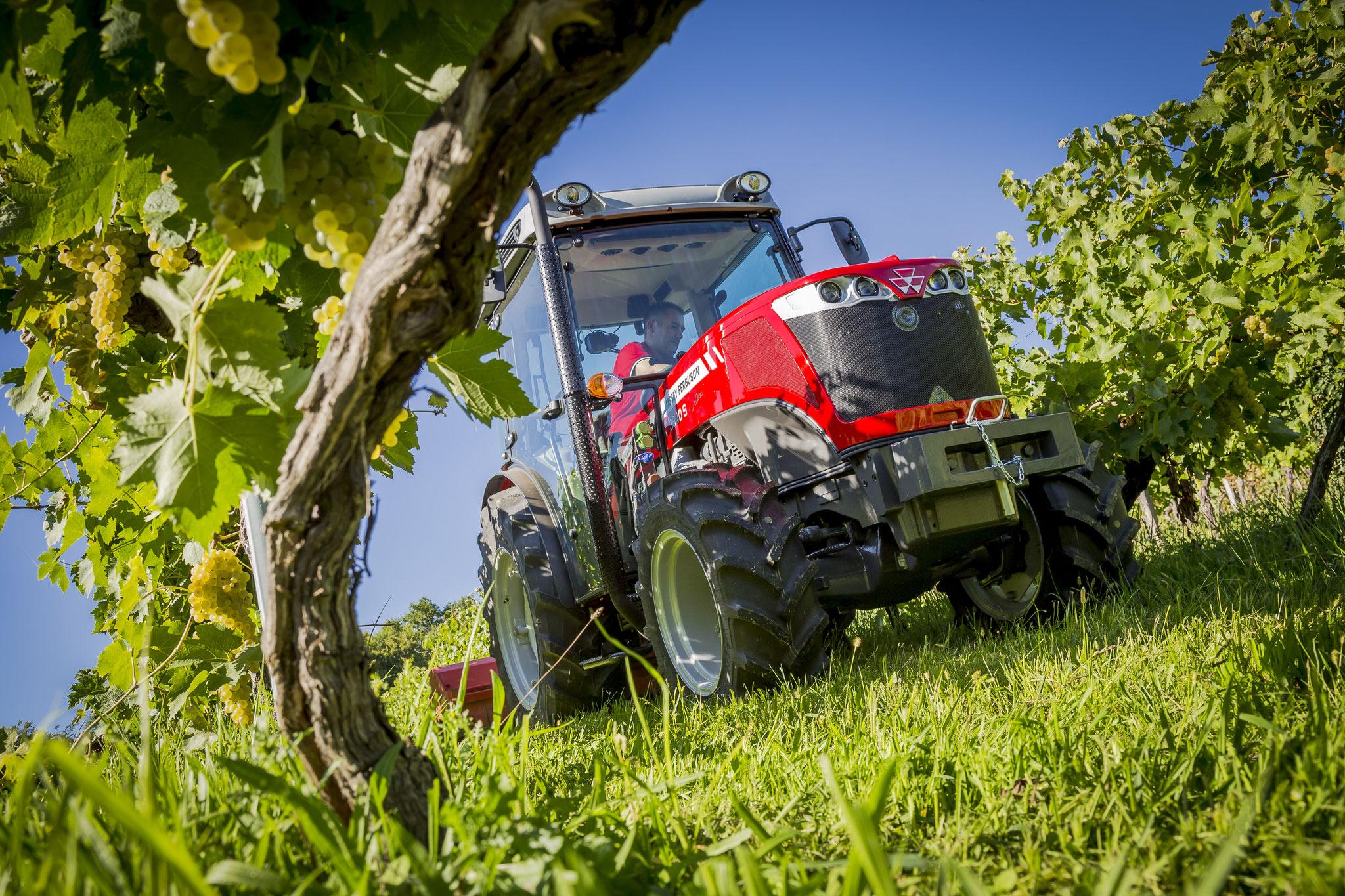 MF Traktor im Weingarten