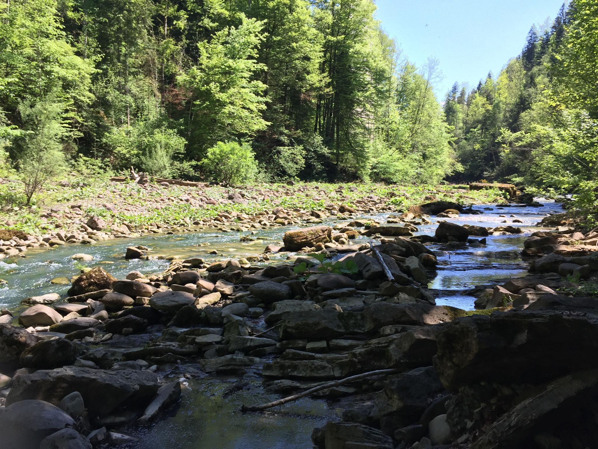 Die Bolgenach und ihre Landschaft