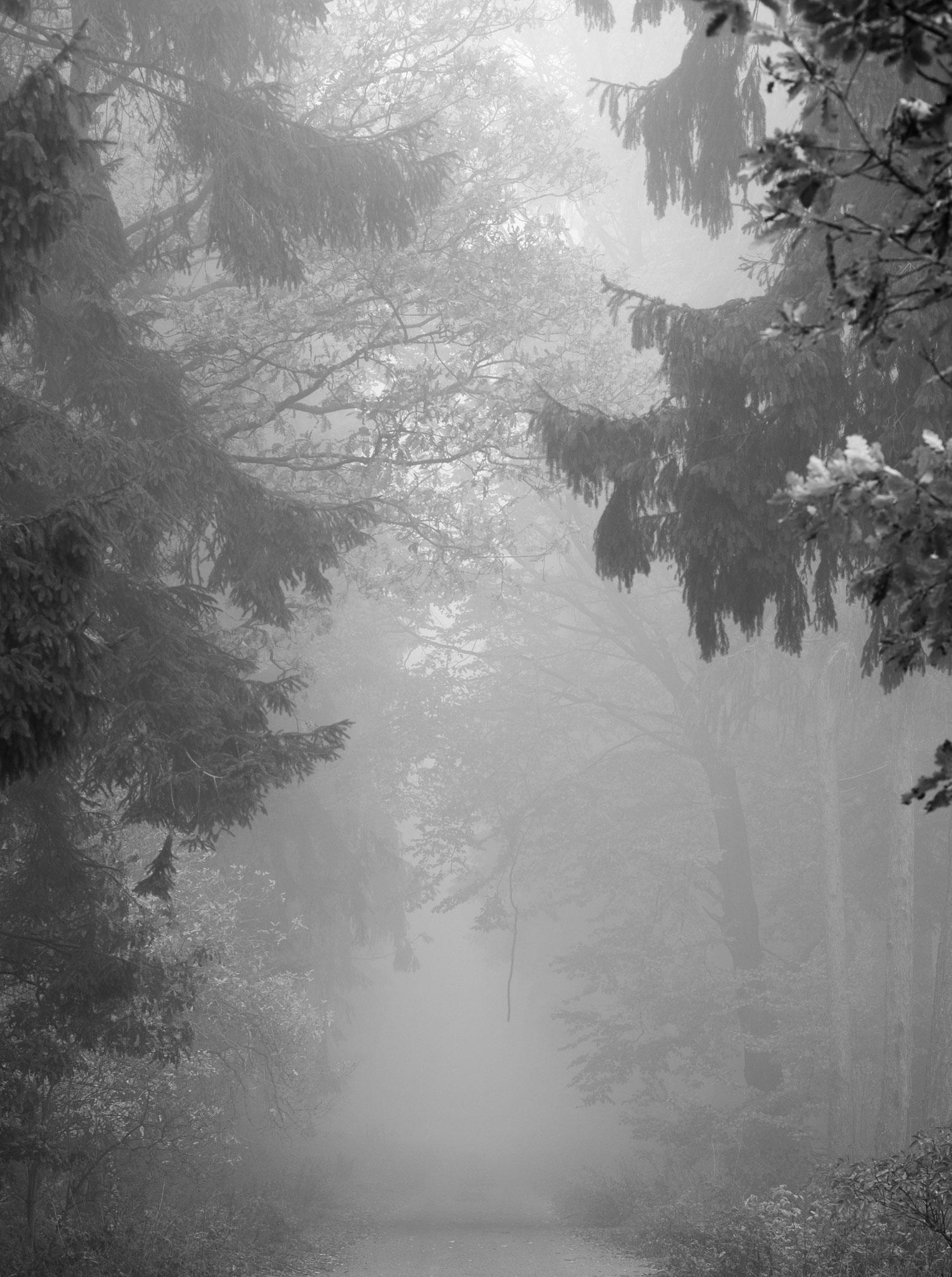 Eingang zum Nebelwald