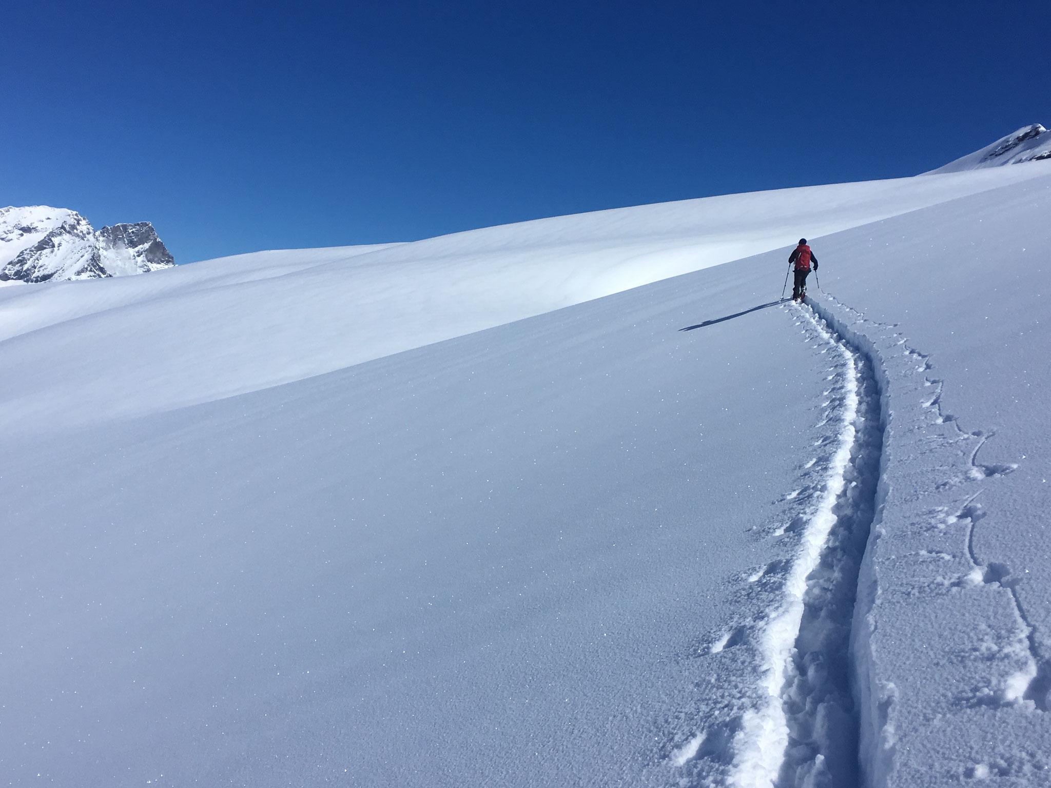 Blaise à la trace sur le Glacier de Lavassey