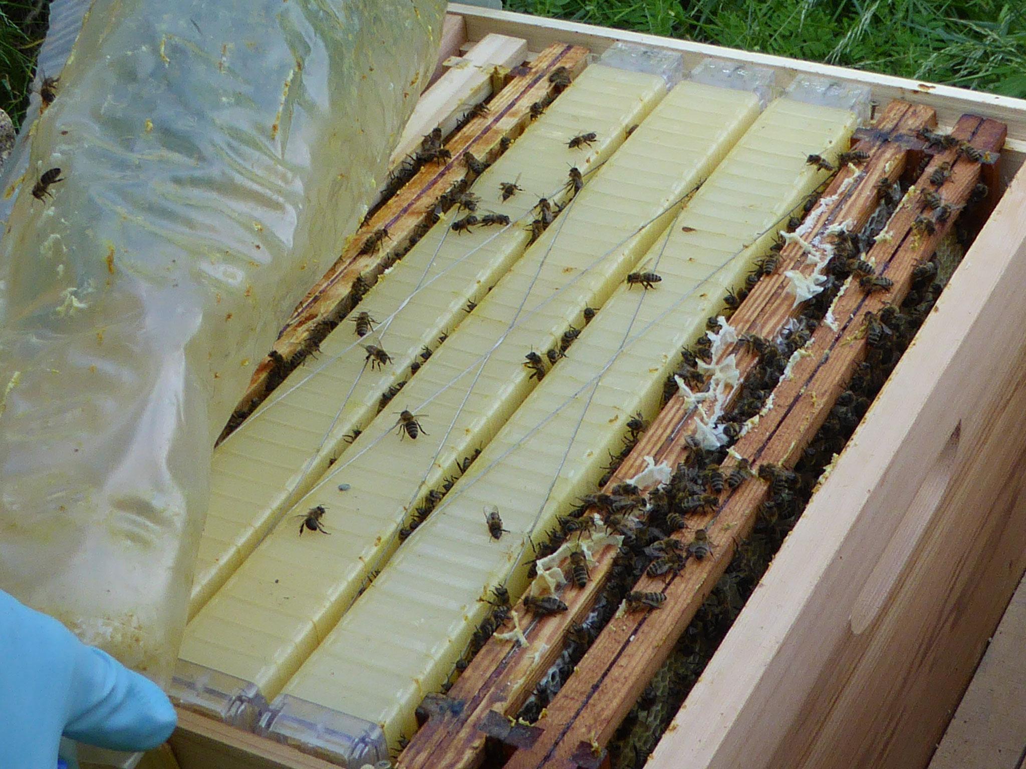 So sieht also der Honigraum aus.