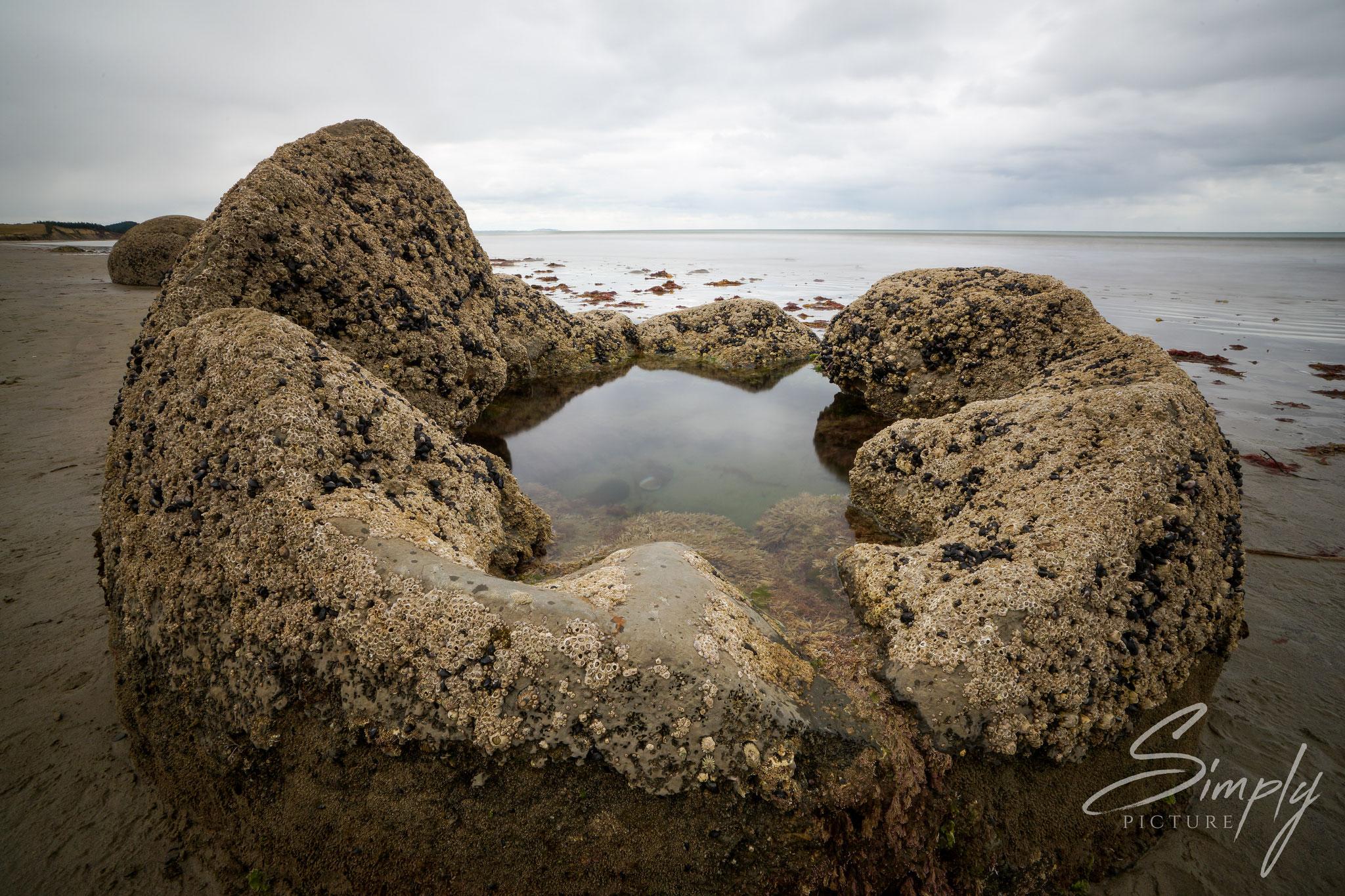 Moeraki Bolders, aufeplatzer Stein mit einer Spiegelund des bewölkten Himmels in der Wasserfläche