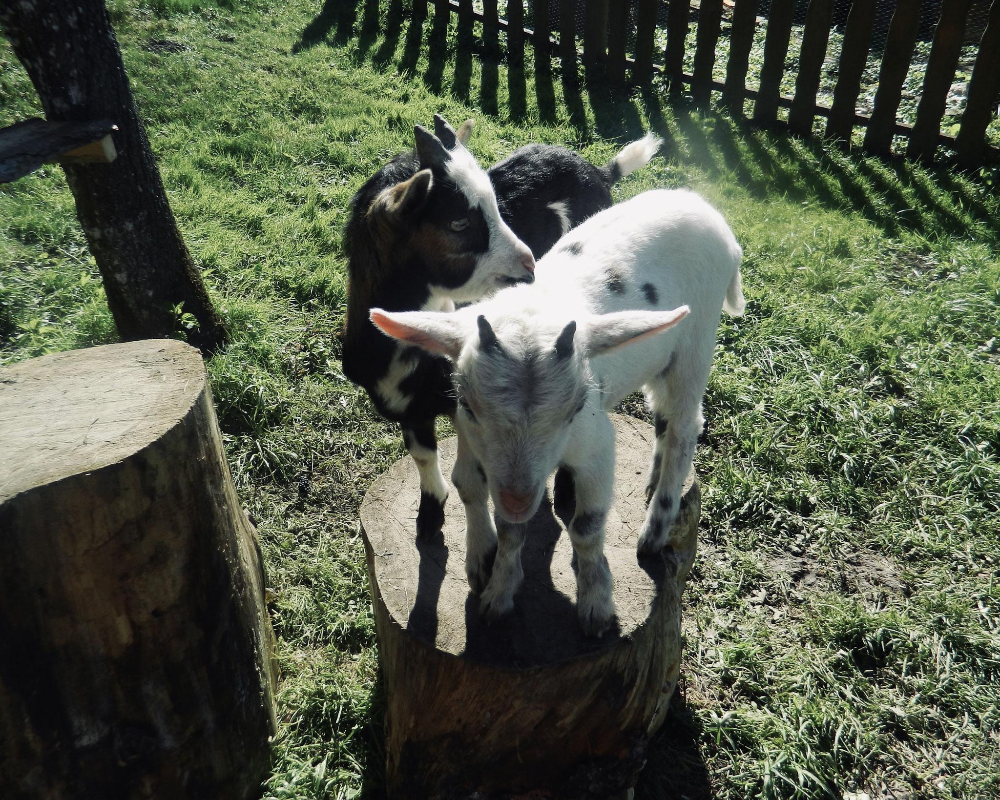 Streichel-Zoo bei Reiters Ferienhaus
