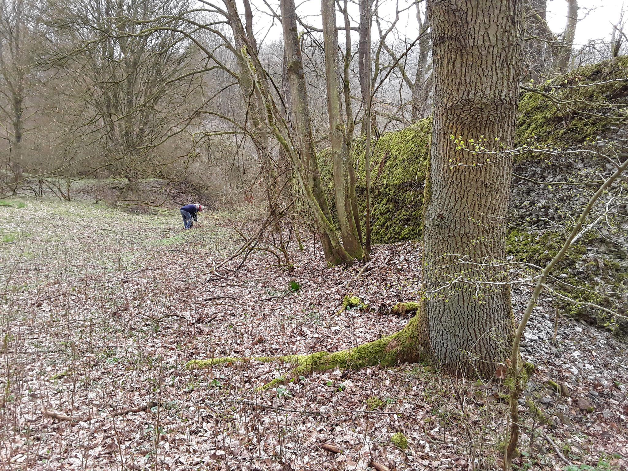 Blick mit dem Bf. Christianshütte im Rücken. Hier lagen wohl 2 Gleise