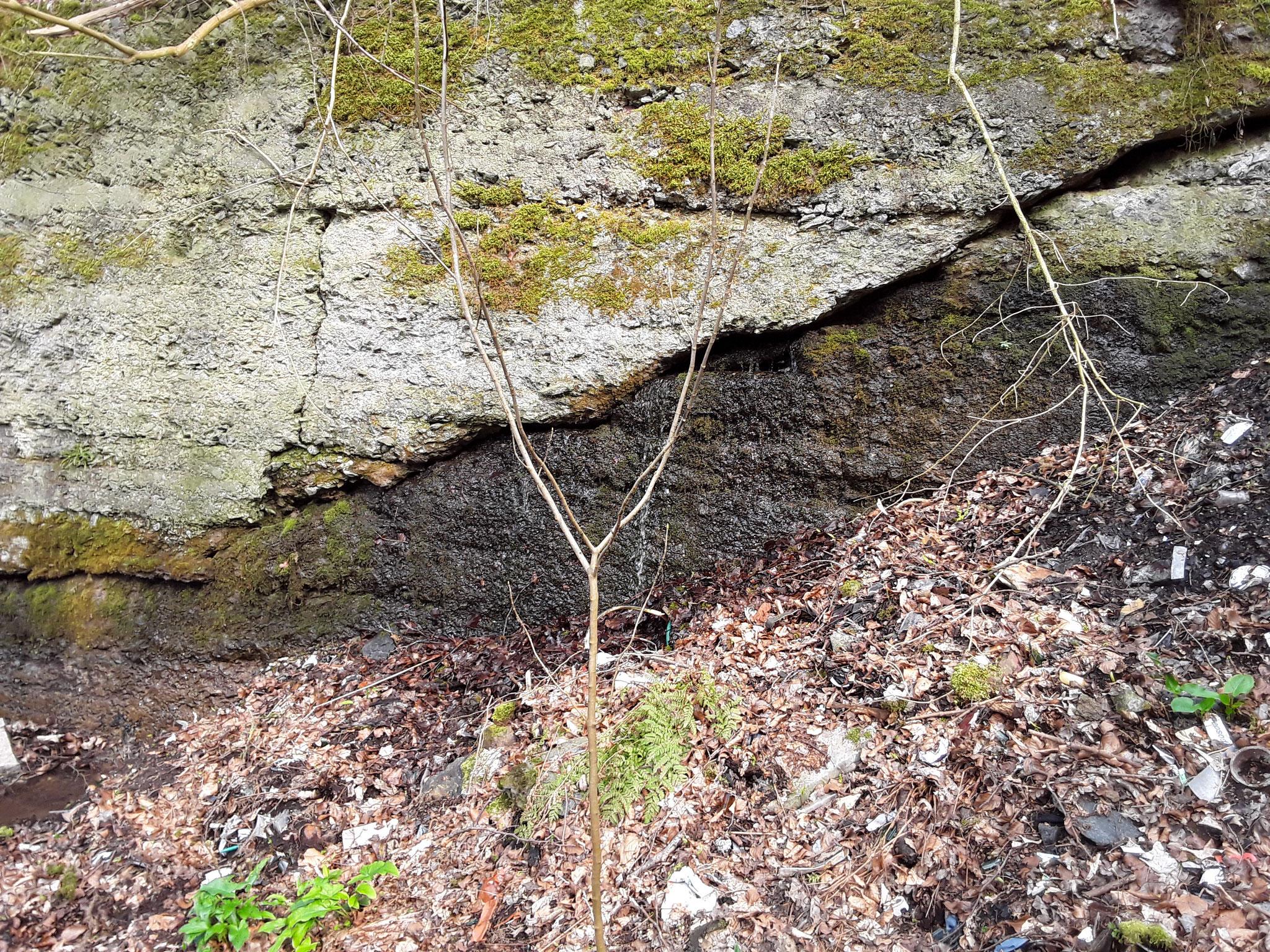 Das Grubenwasser das weiter oben austritt sickert durch die Halde und tritt hier aus