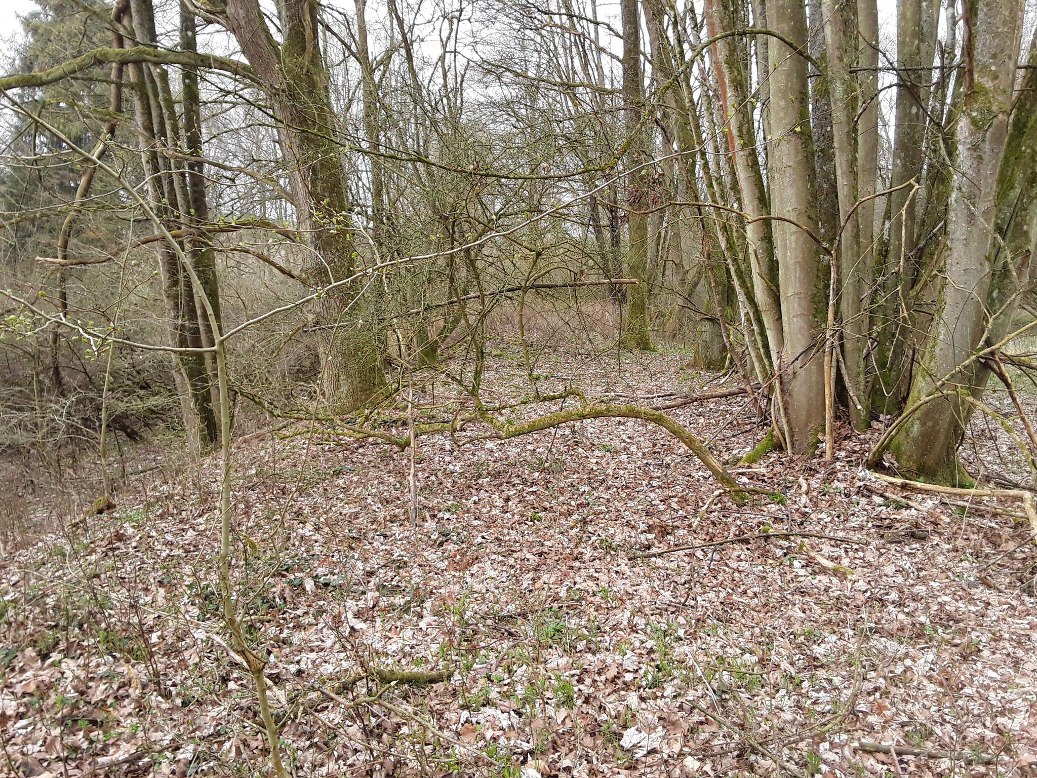 Der Damm des Anschluß- Gleises von dem Bf Christianshütte ist noch erkennbar