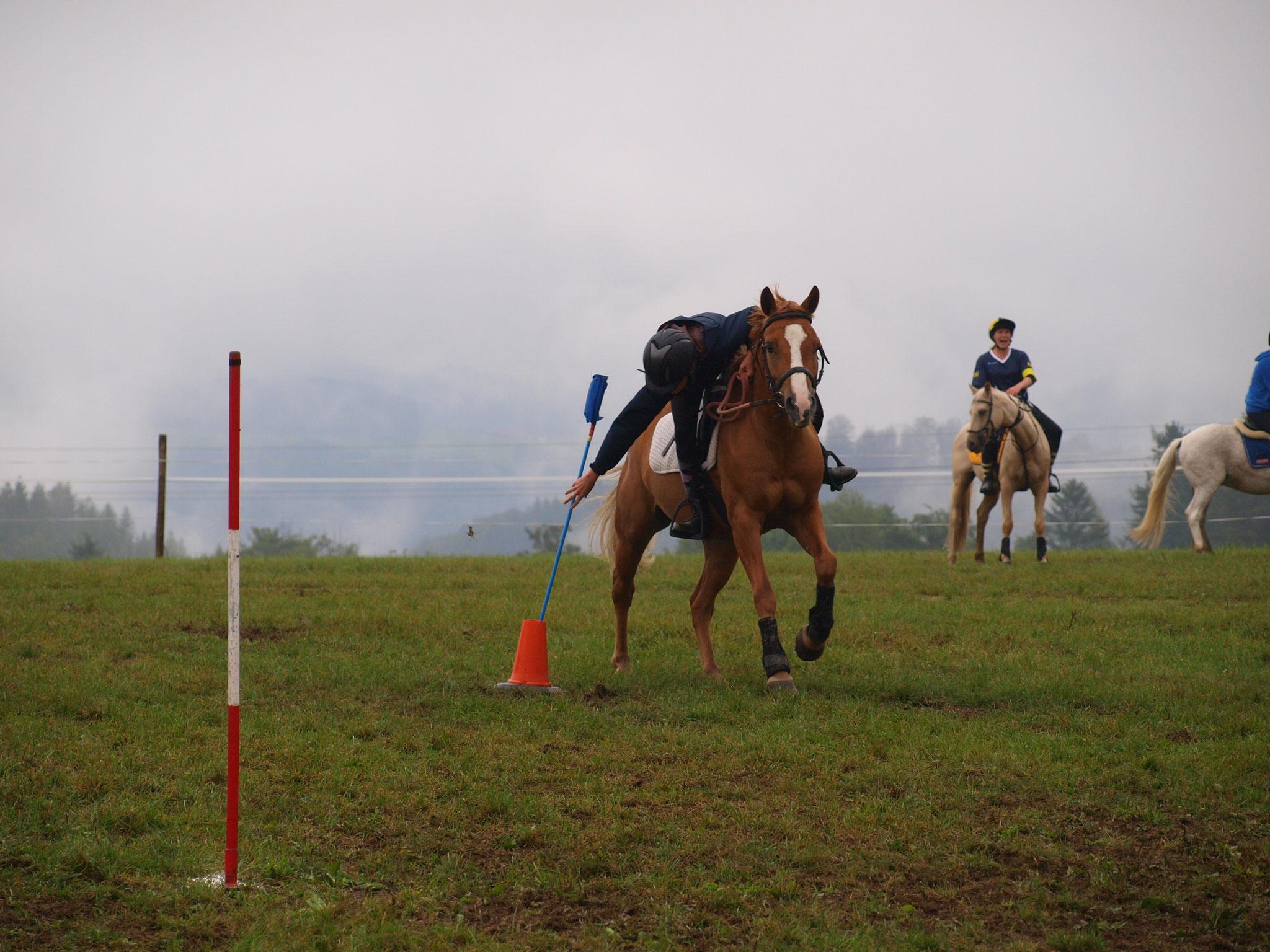 Hafloaraber Paddy´s Nikita bei Mounted Games
