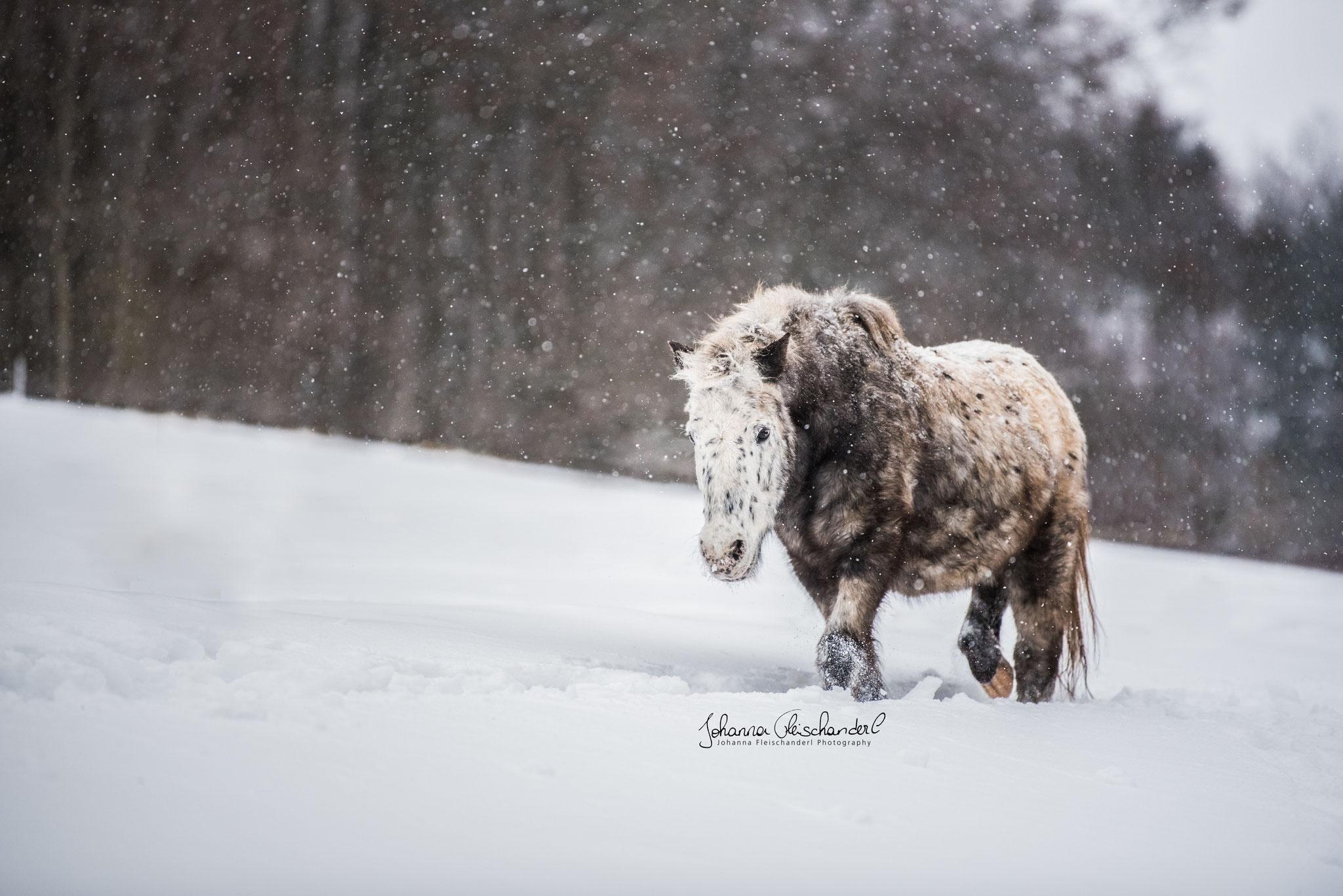 Armani im Schnee von Johanna Fleischanderl