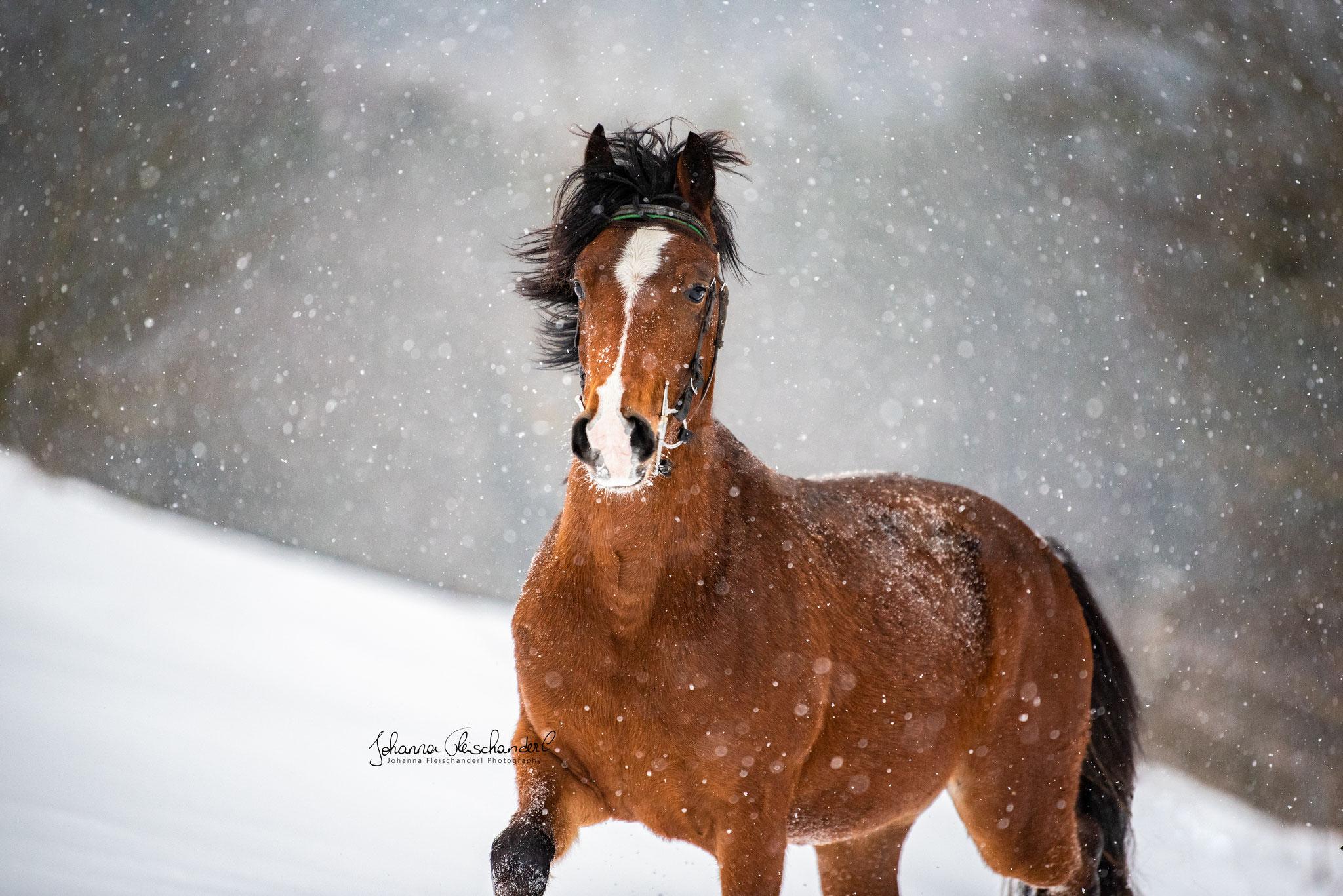 Pieter im Schnee von Johanna Fleischanderl