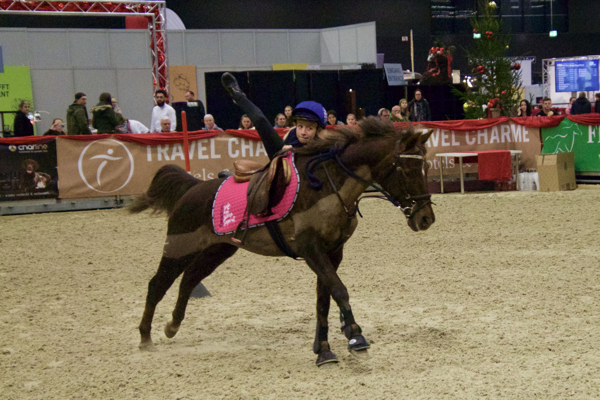 Cindy - Welsh B Pony - Aufspringen
