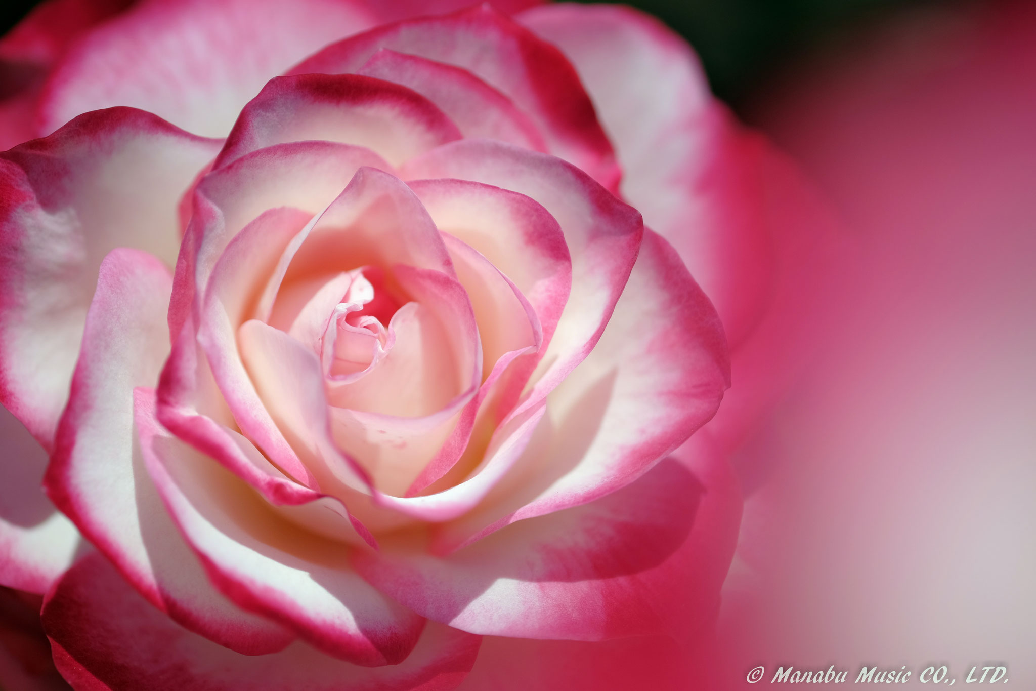 Rose X-E2 XF60mm