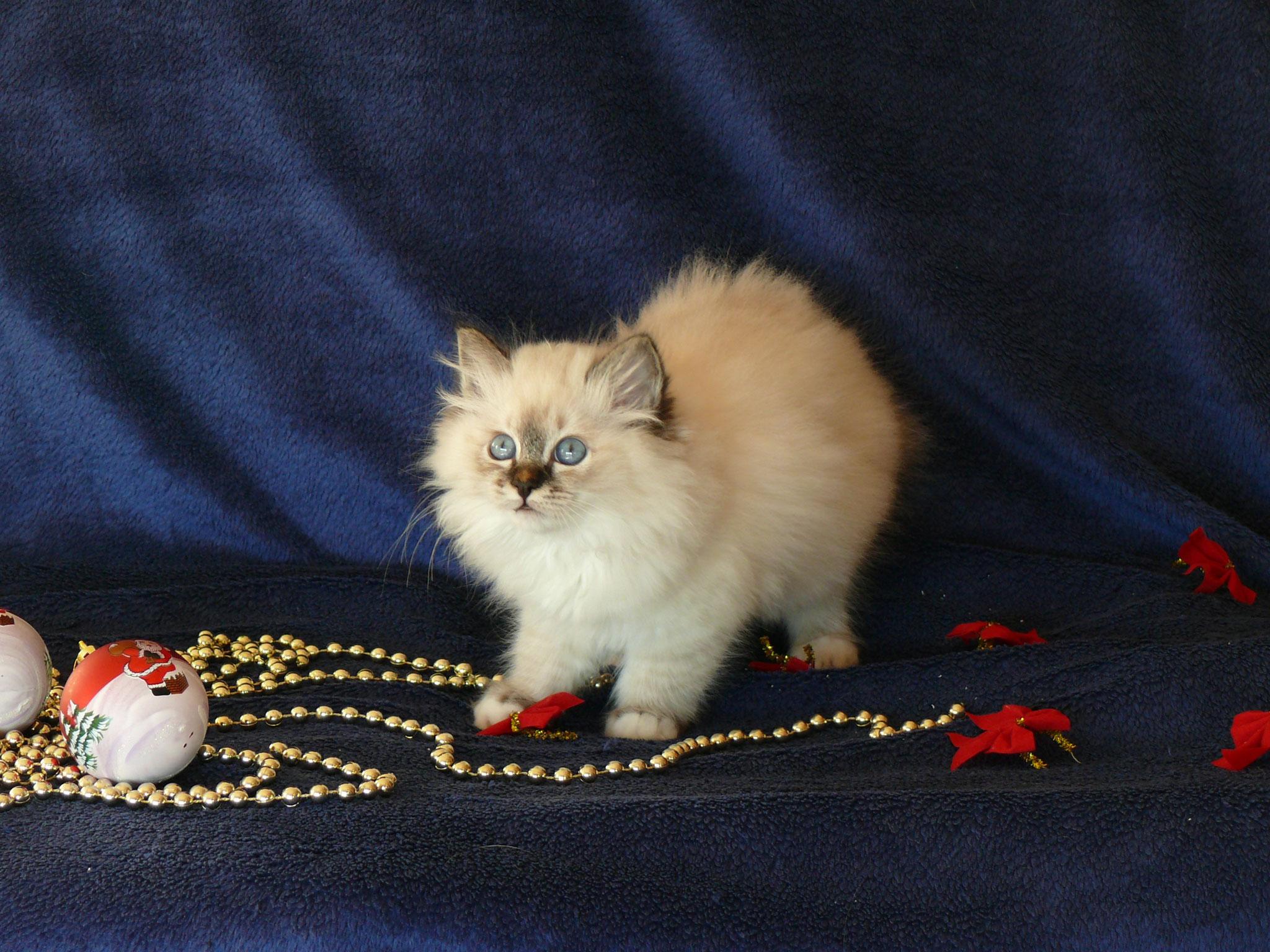 Abbey Rose von der Mondblume, 10,5 Wochen alt