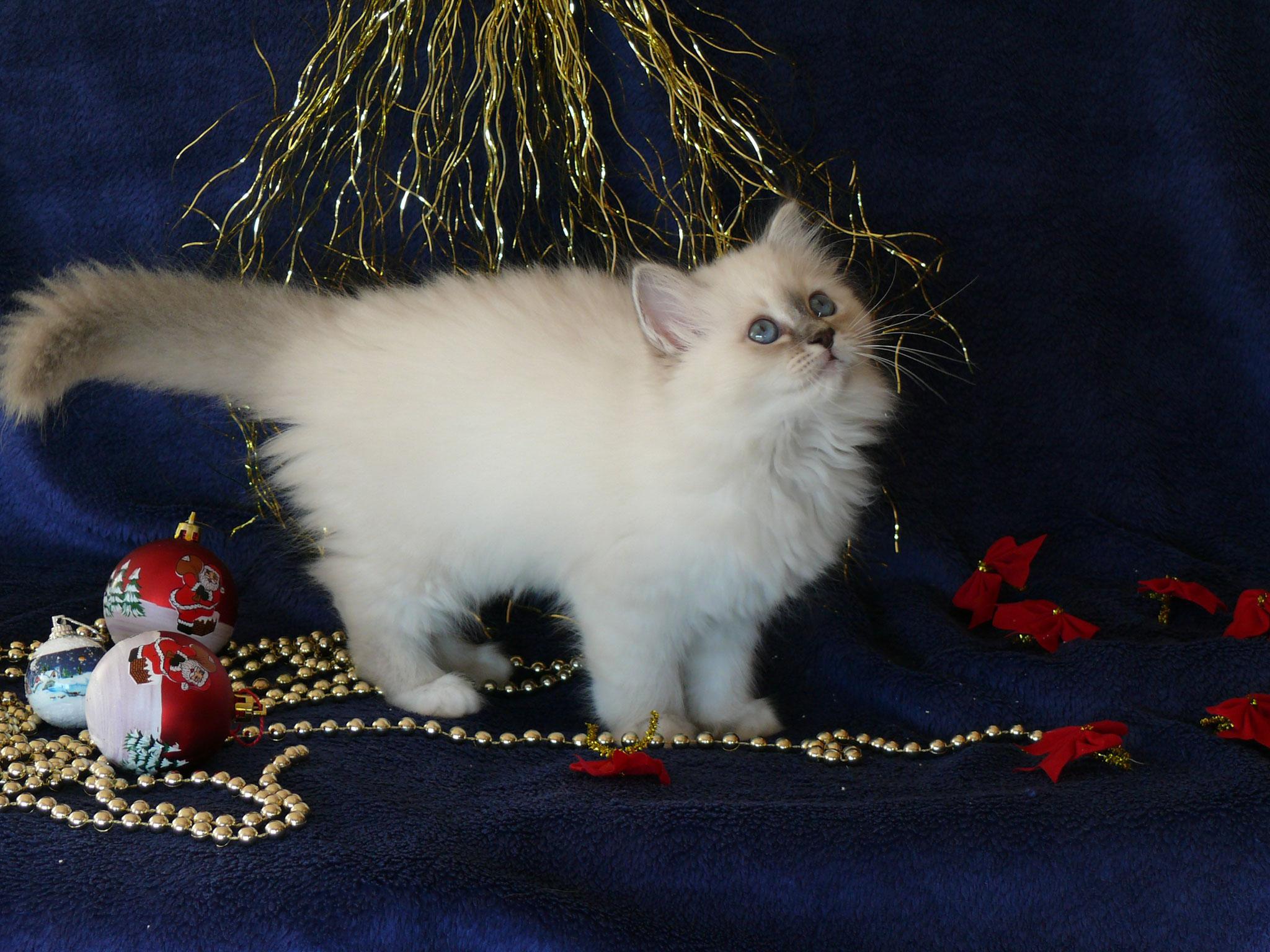Alexis von der Mondblume, 10,5 Wochen alt