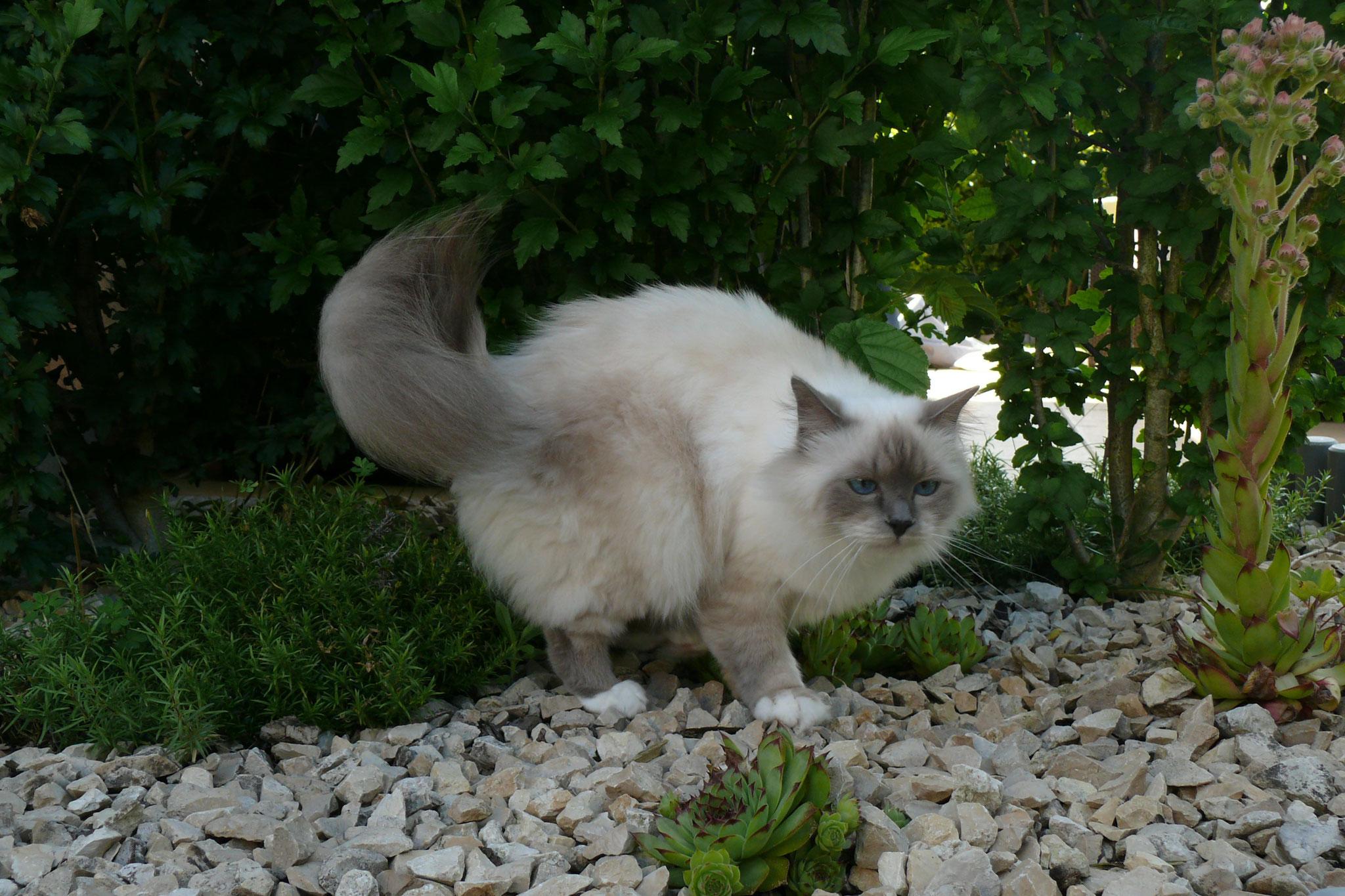 Tamia vom Lilienweg, knapp 3 Jahre alt, 3,2 kg