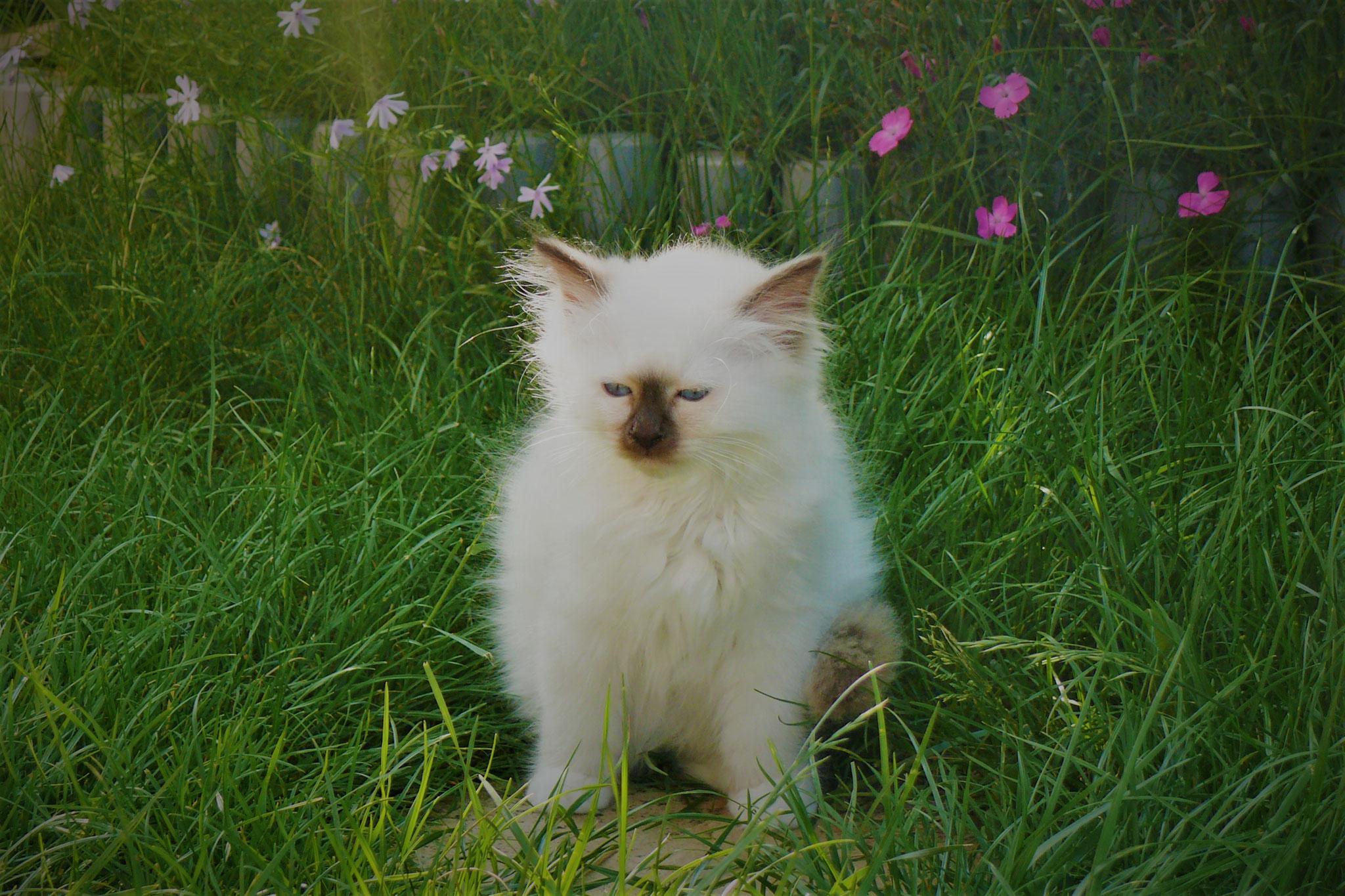 Chérie von der Mondblume, 11,5 Wochen alt, 925 g