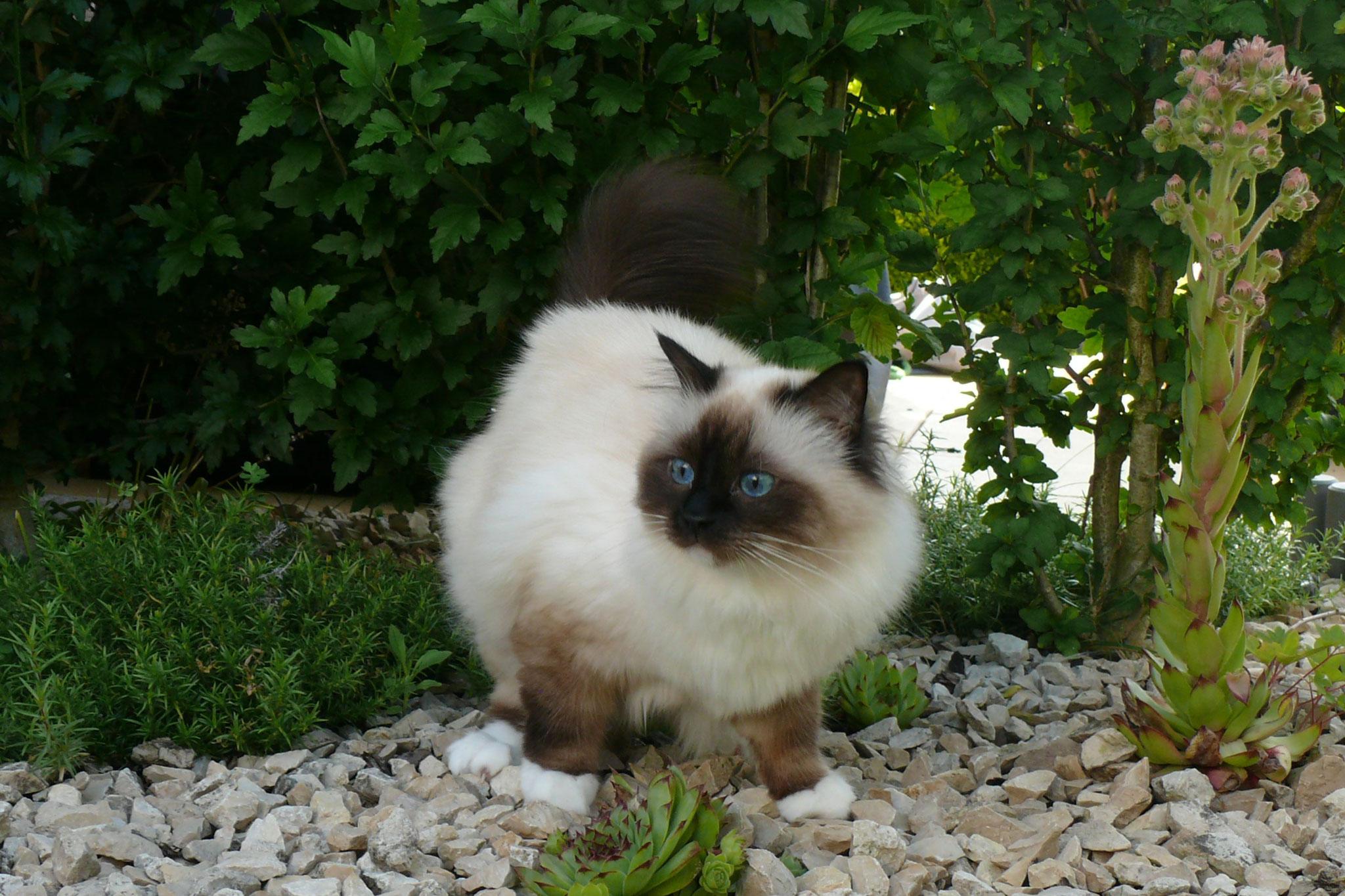 Tookie vom Lilienweg, knapp 3 Jahre alt, 3,5 kg
