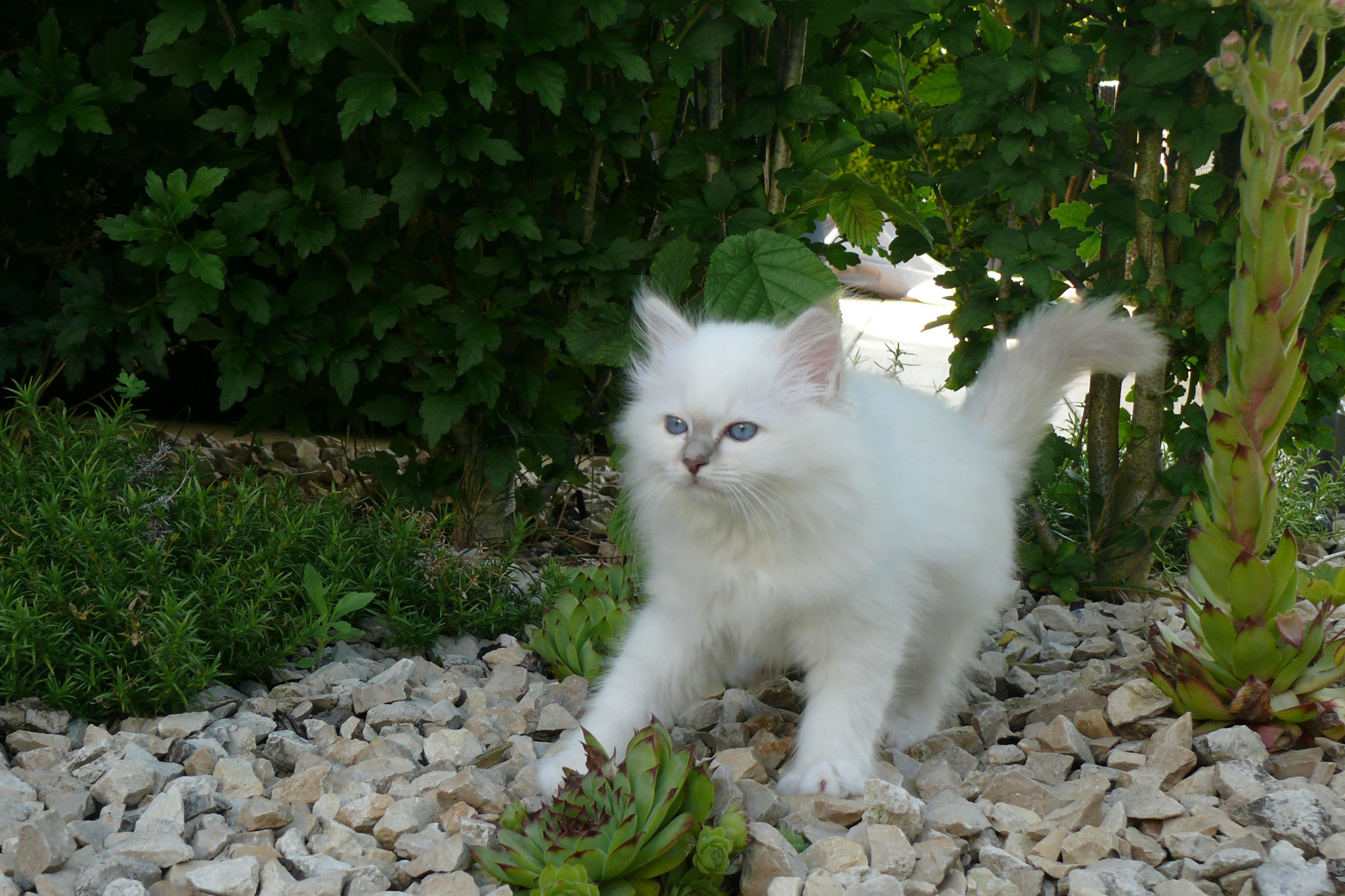Duchesse von der Mondblume, 10,5 Wochen alt, 998 g