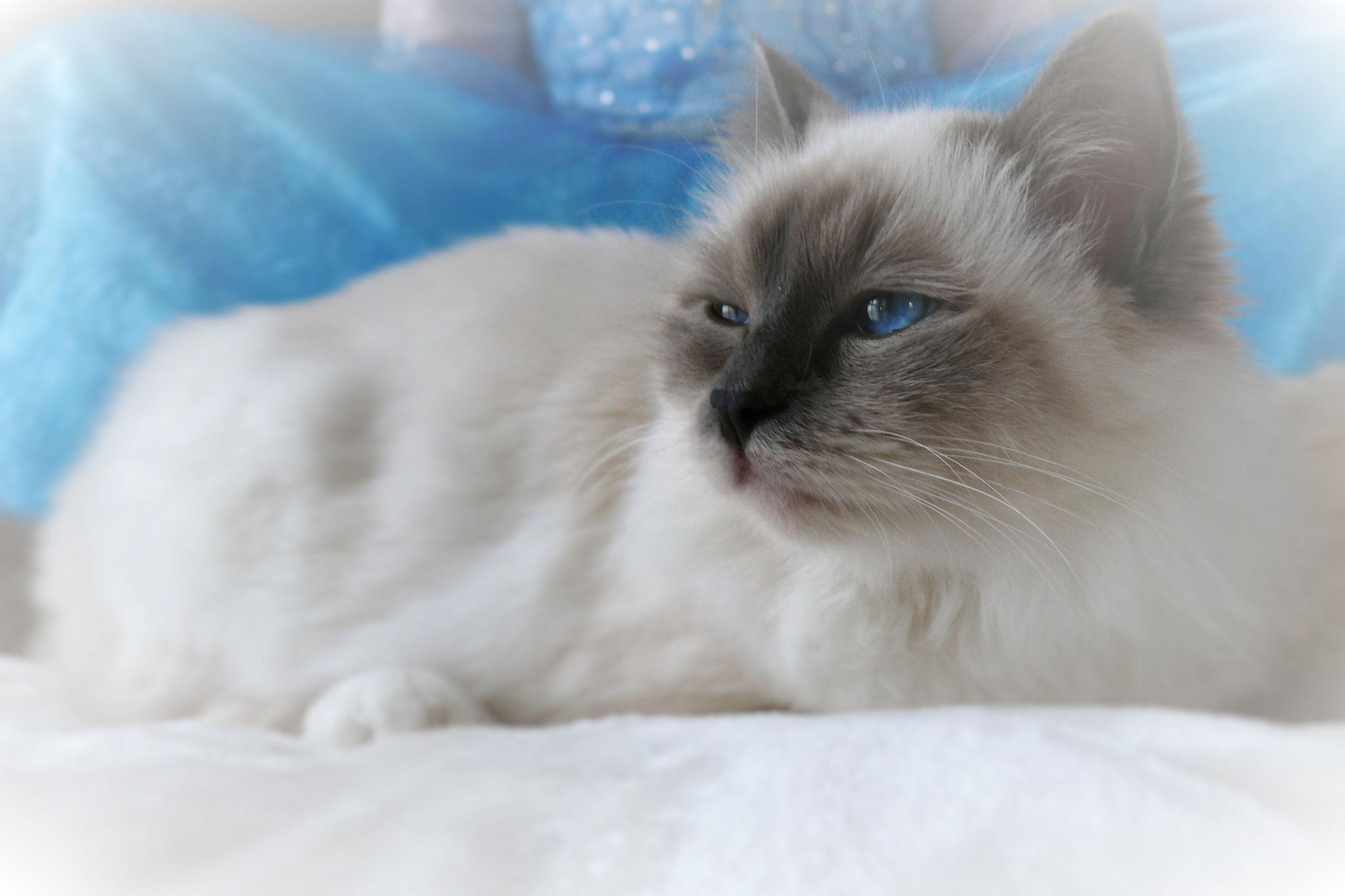 Tamia vom Lilienweg, 8 Monate alt