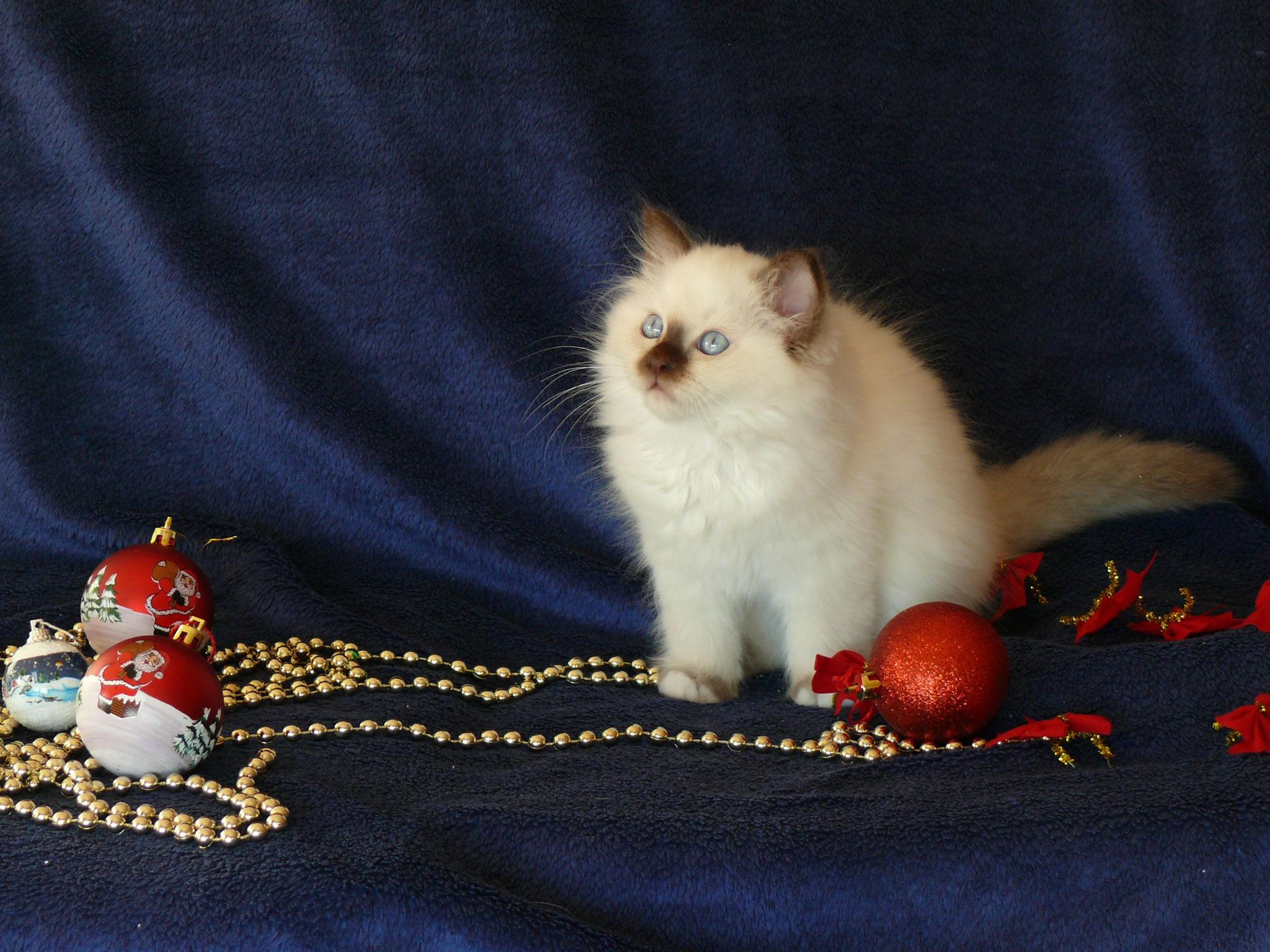 Amigo von der Mondblume 10,5 Wochen alt