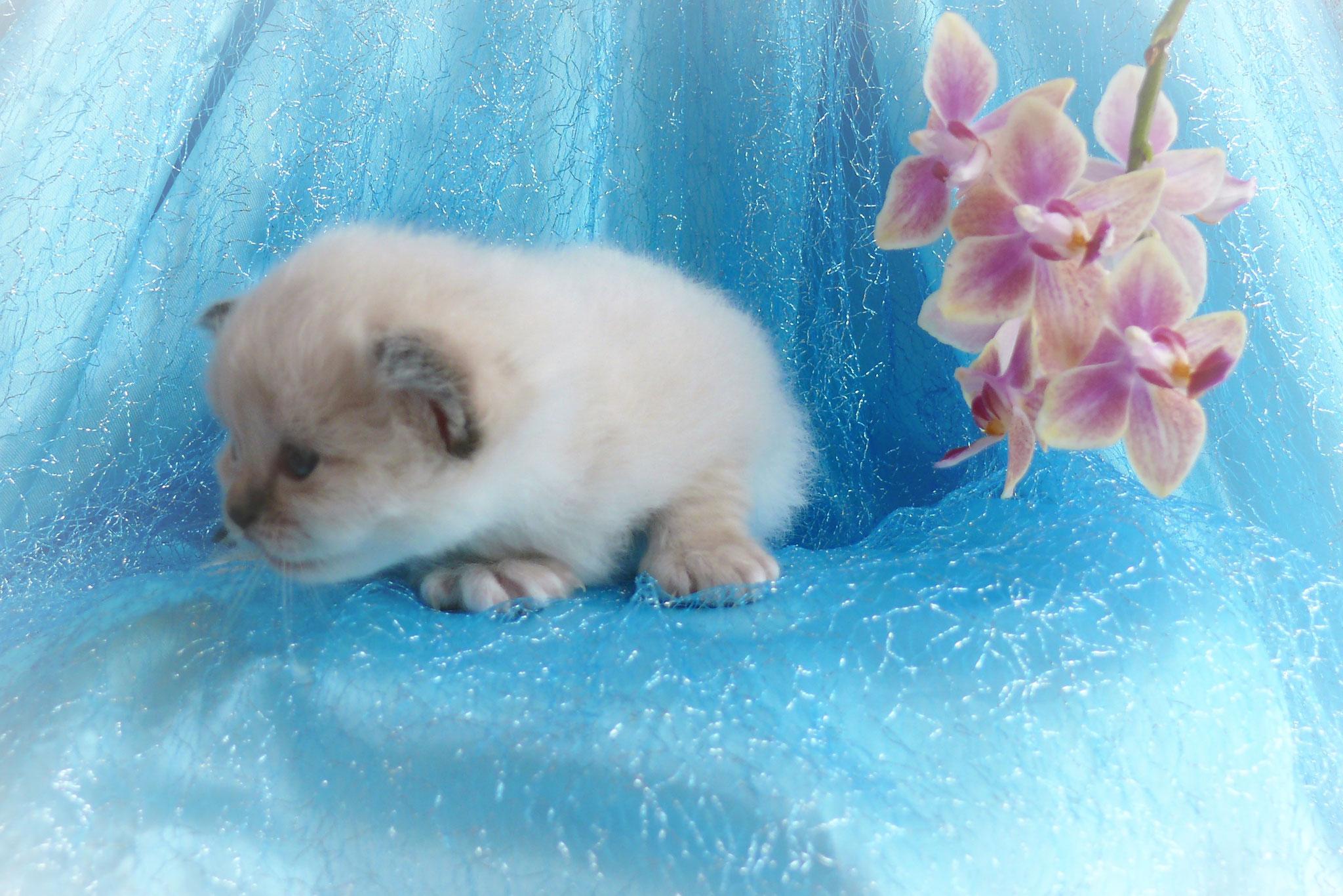 Belina von der Mondblume, 3 Wochen alt, 313 g