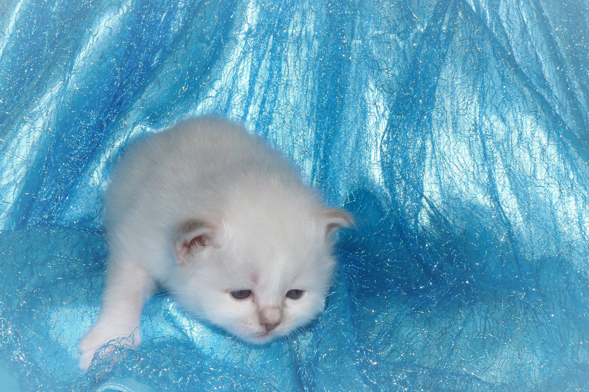 Duchesse von der Mondblume, 21 Tage alt, 318 g