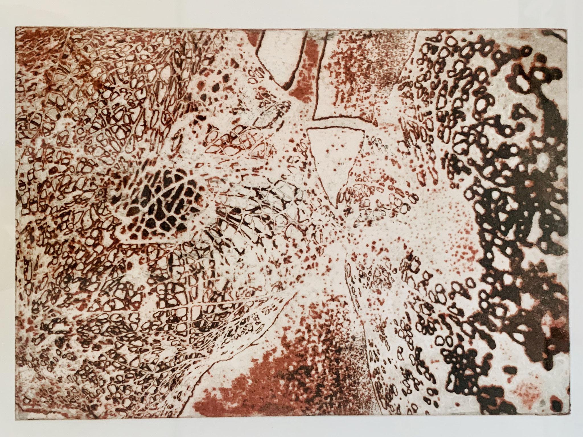 51. Sabina Potthoff, Physalis I, Intagliotypie auf Bütten-Kupferdruckkarton, 400 x 560 mm, 2018, 500 €