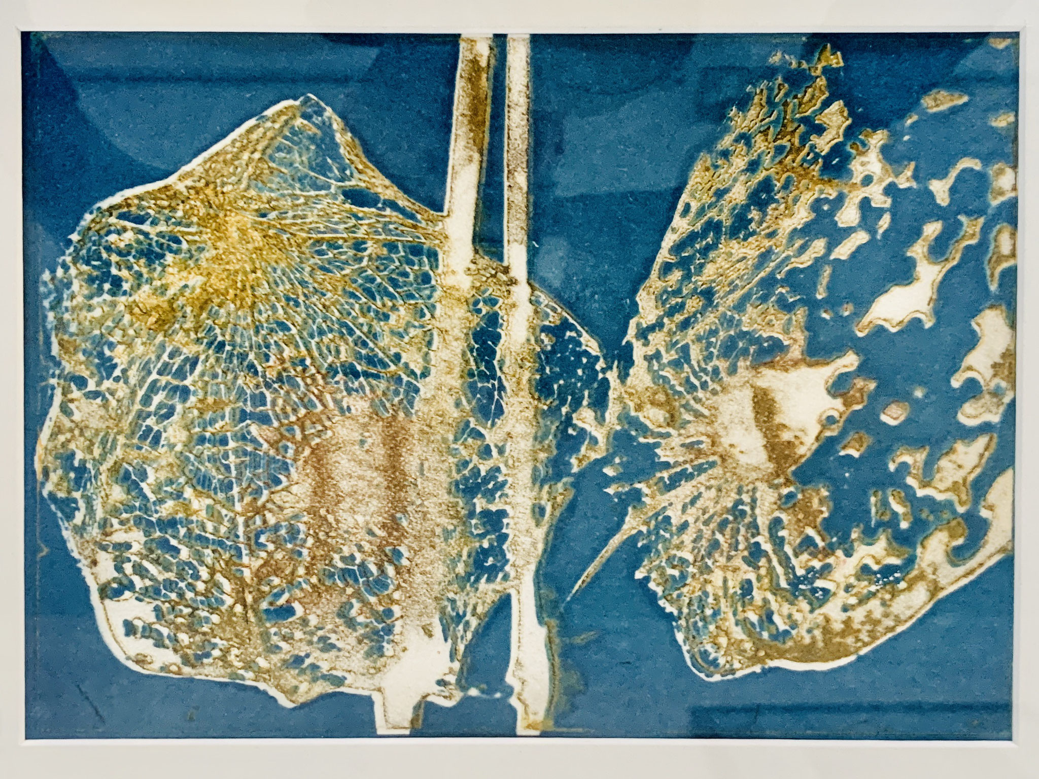 52. Sabina Potthoff, Physalis II, Intagliotypie auf Bütten-Kupferdruckkarton, 390 x 280 mm, 2018/2020, 250 €