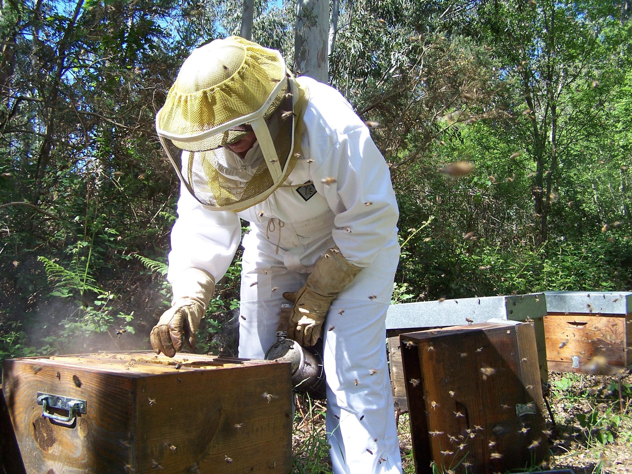 apiculteur urrugne