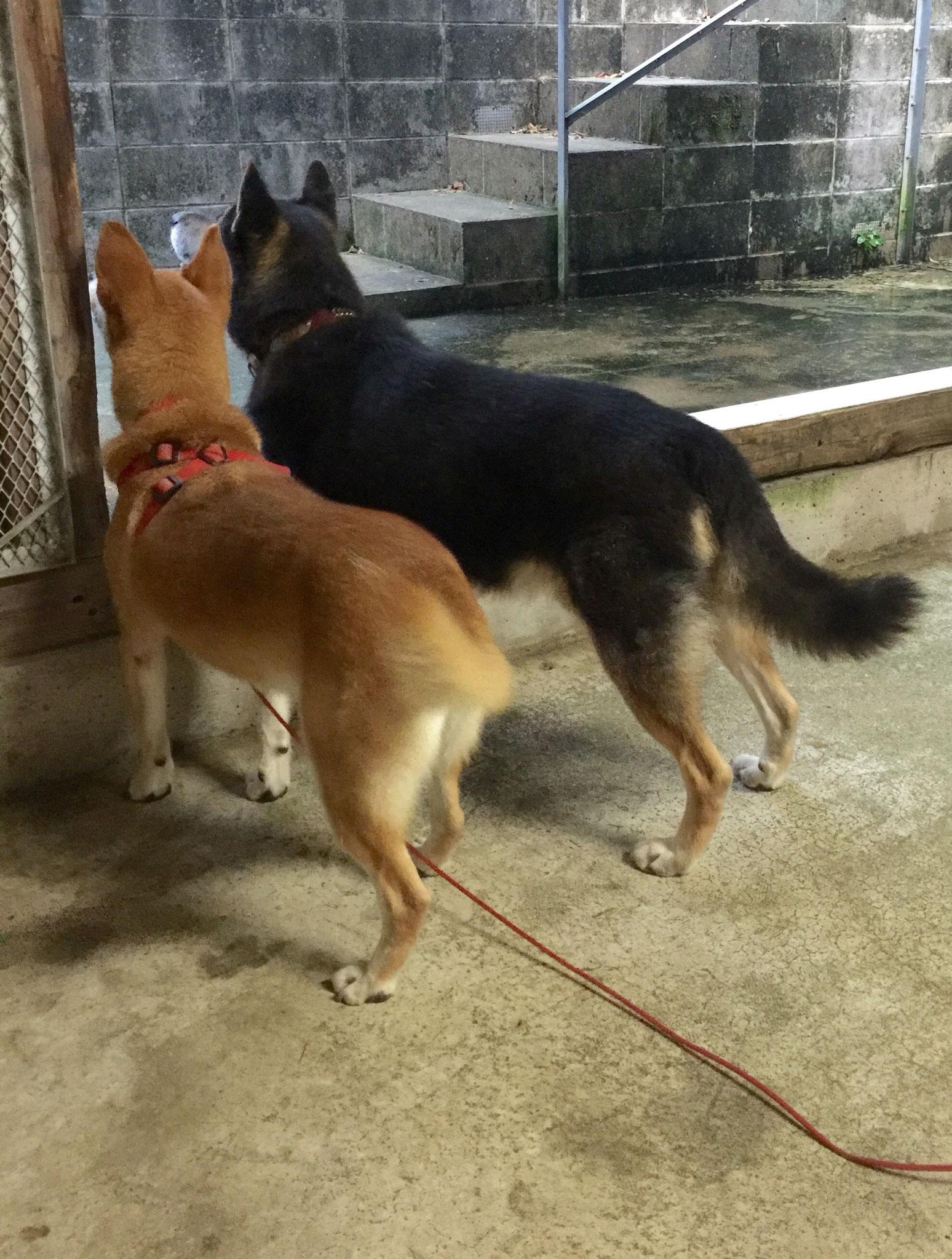 保護犬のかわいい後ろ姿。なにを見ているのかしら…?