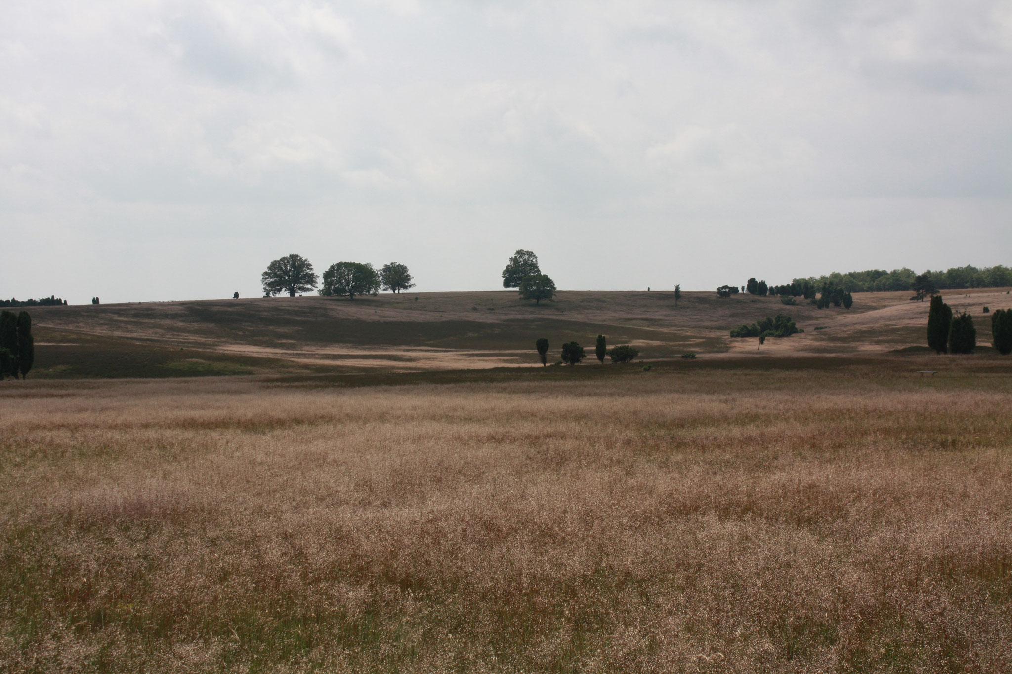 Люнебургская пустошь