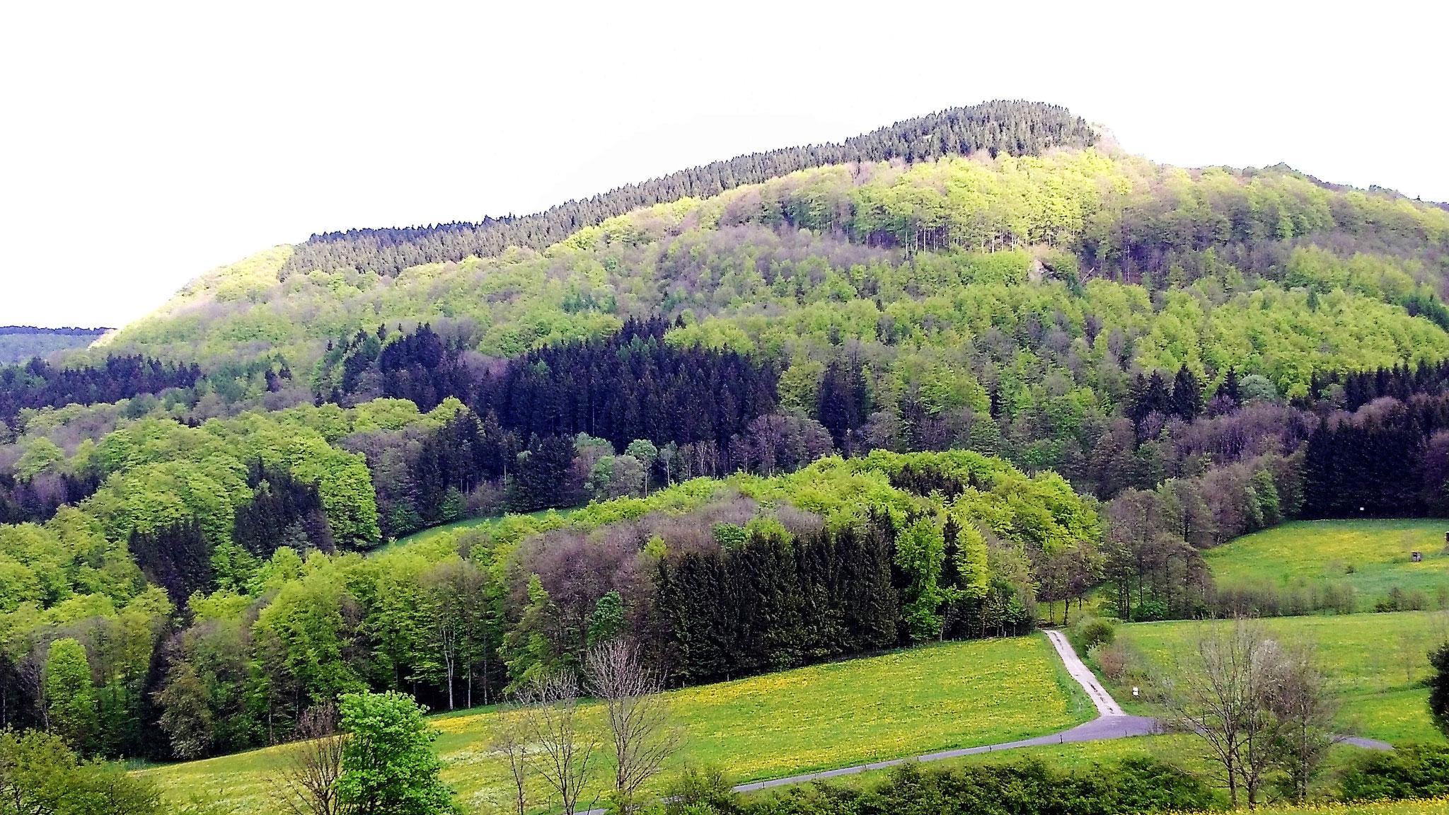 Blick vom Rengersfelder Küppchen auf den Reesberg