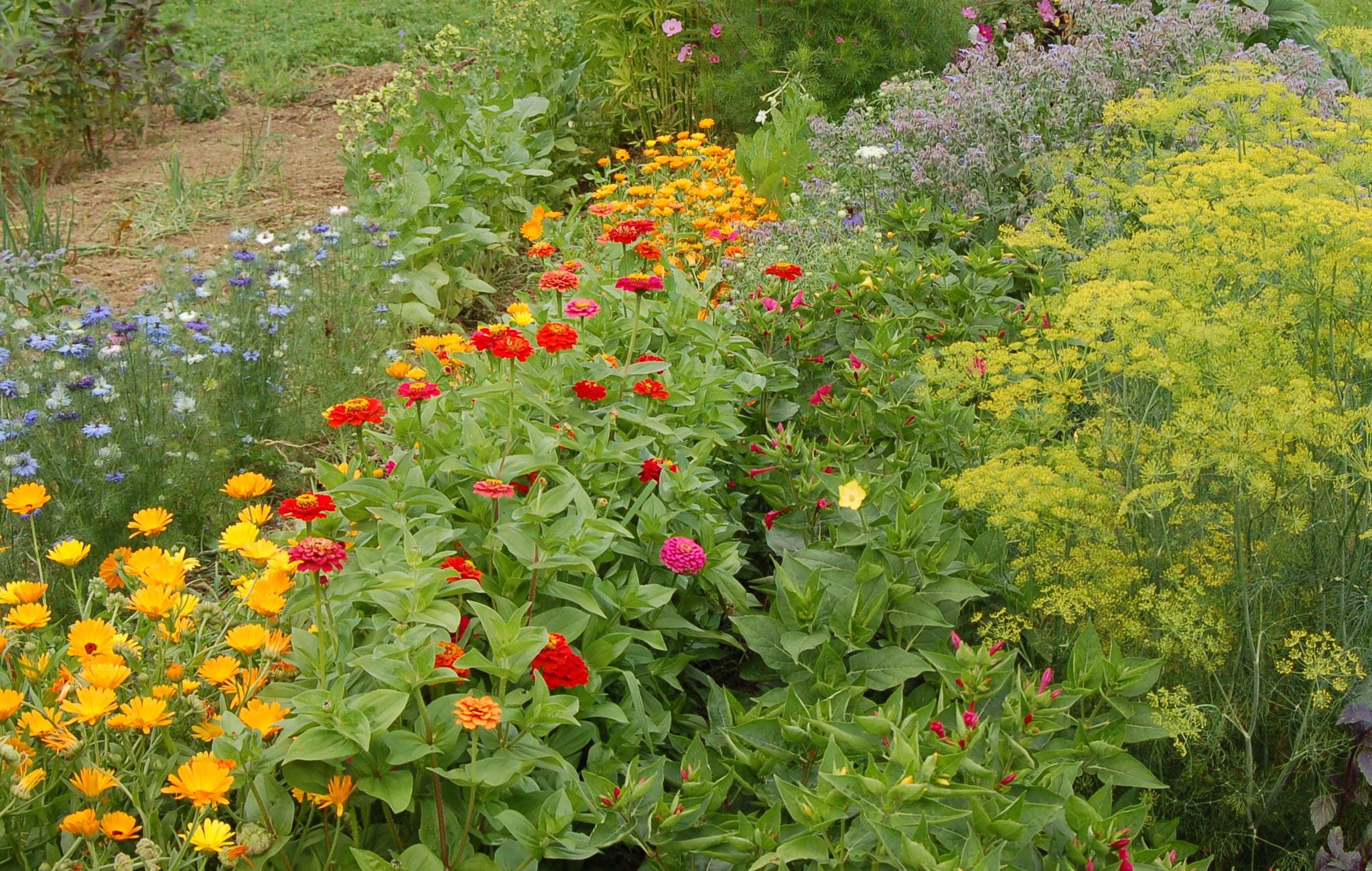 Einjährige Blumen Sommer 2012