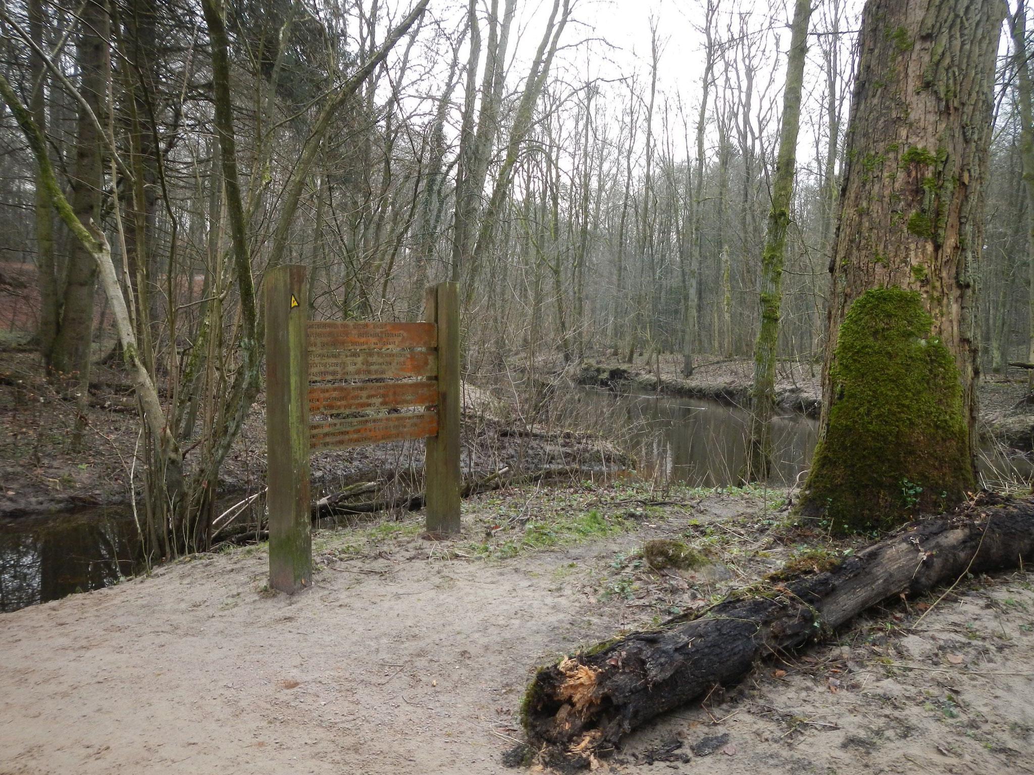 Mit dem Hochwasser hat die Alster zu Weihnachten 2014 viel Sand auf die Ufer gelegt. Am Baum ist noch die Hochwasserlinie zu sehen.