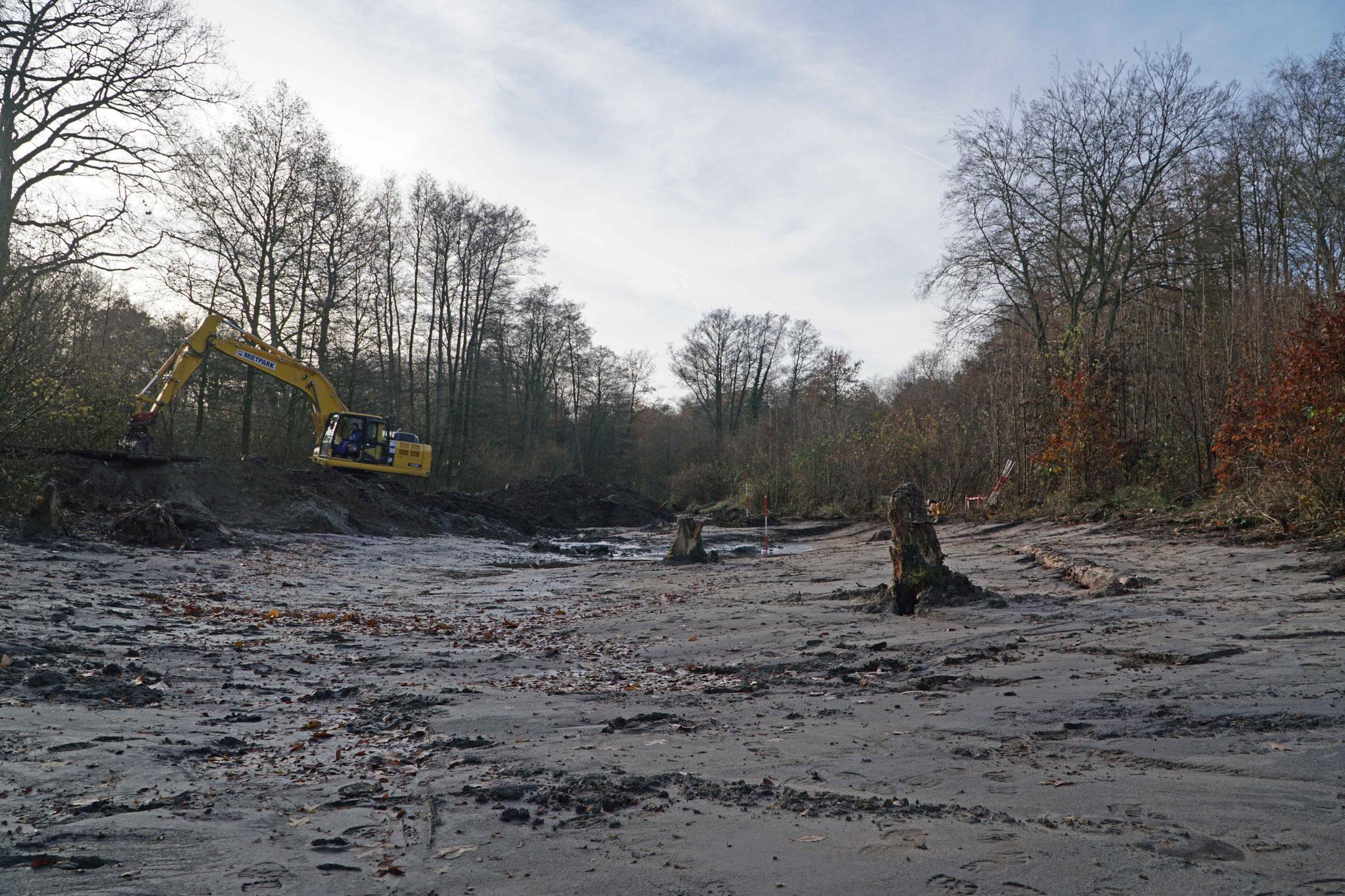 Einzelne Stubben wurden als Totholz-Strukturelemente in der Flutmulde belassen.
