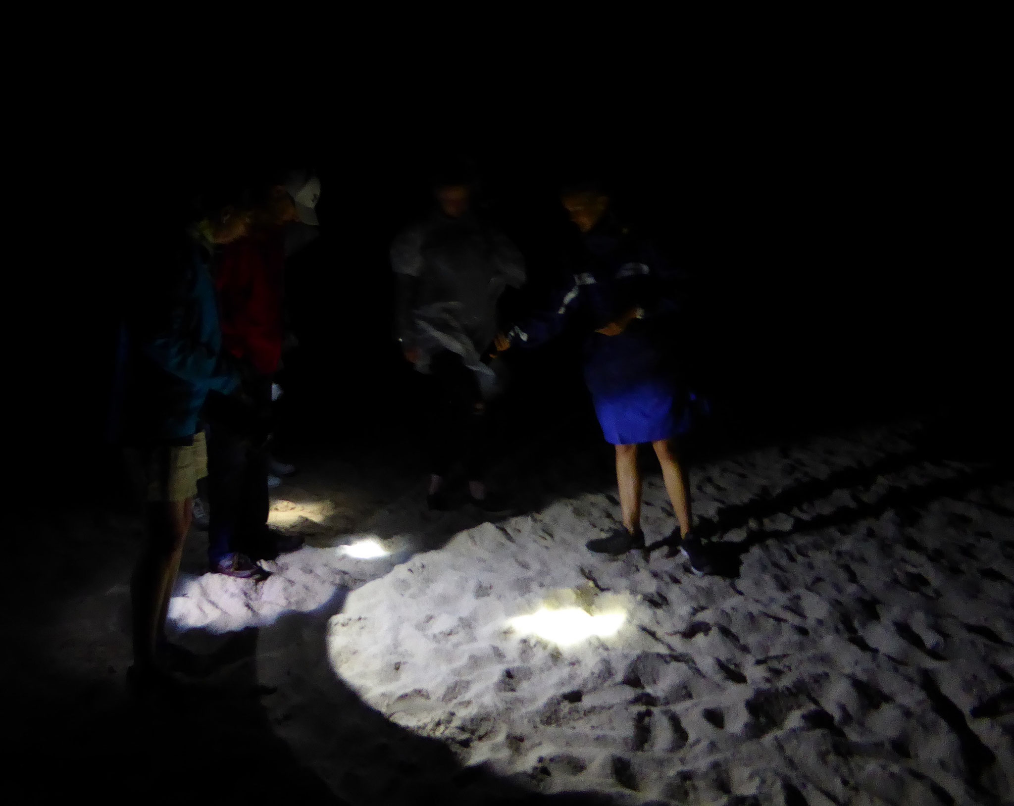 Spotting ghost crabs