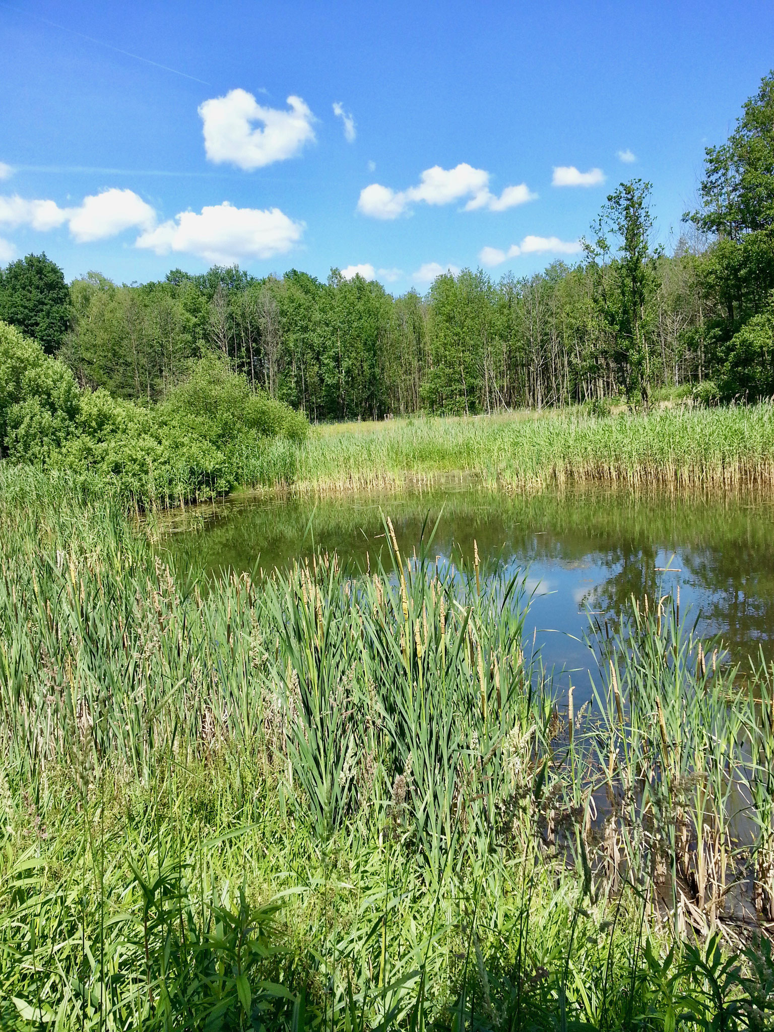 Kleingewässer im Naturpark Slamener Kuthen