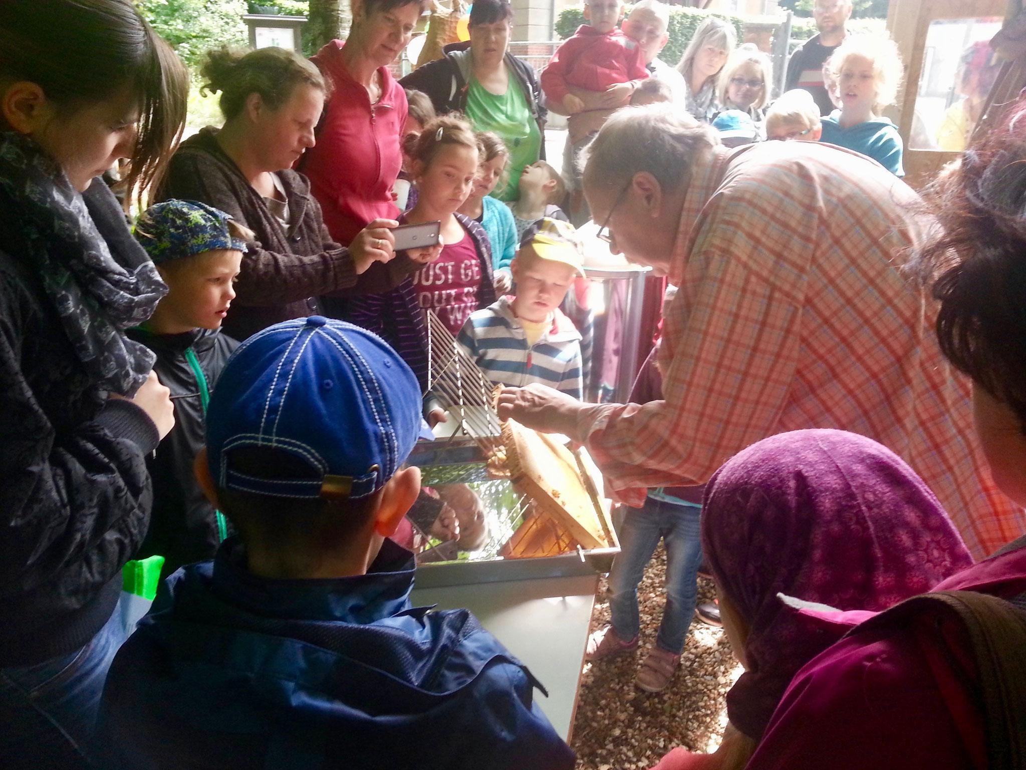 Kinder- und Jugendarbeit in der Lehrimkerei