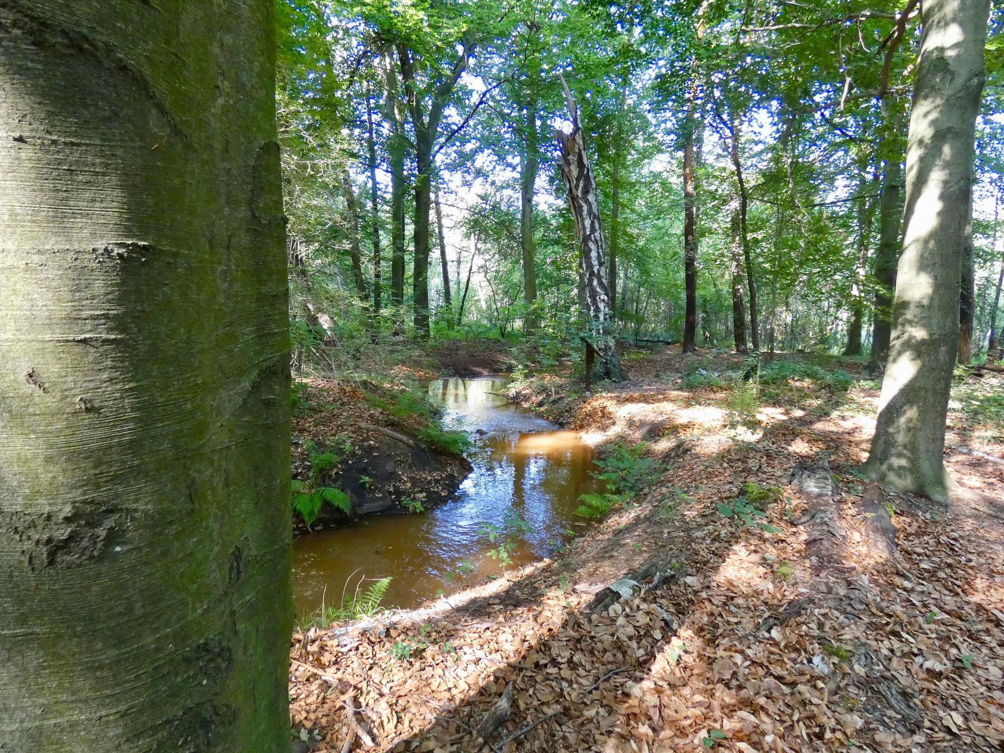 Fließgewässer im Naturpark Slamener Kuthen