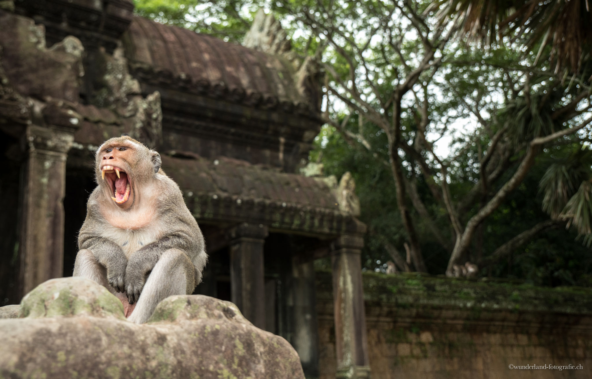 Affe bei Angkor Wat