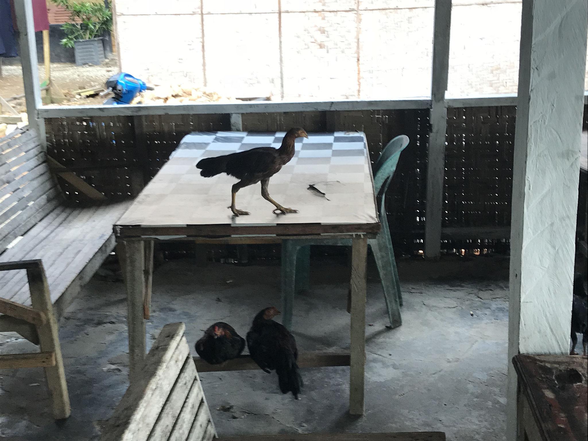 Die Tiere sind überall, vor allem wenn es etwas zu essen gibt.
