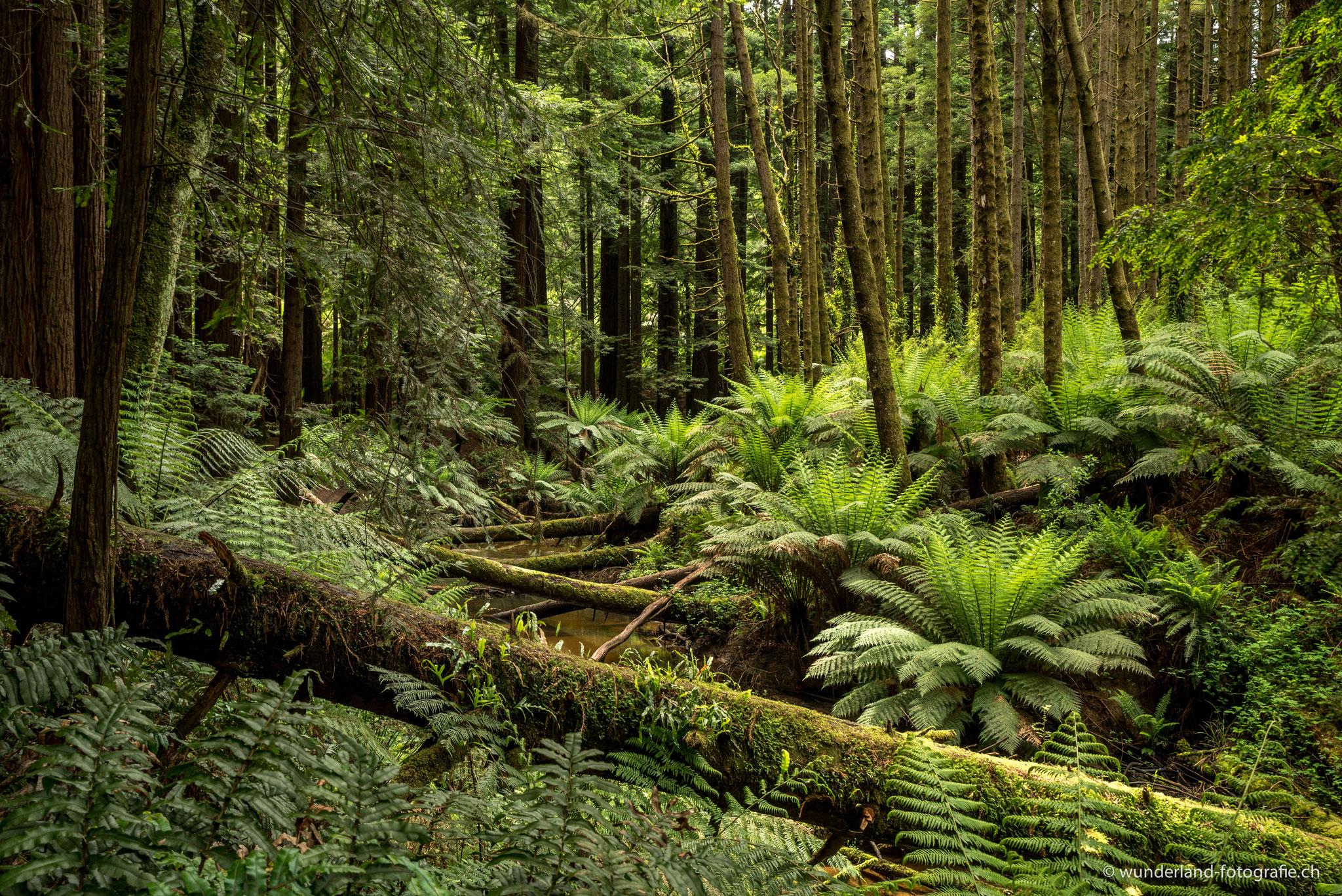 Sind diese Wälder nicht einfach traumhaft?