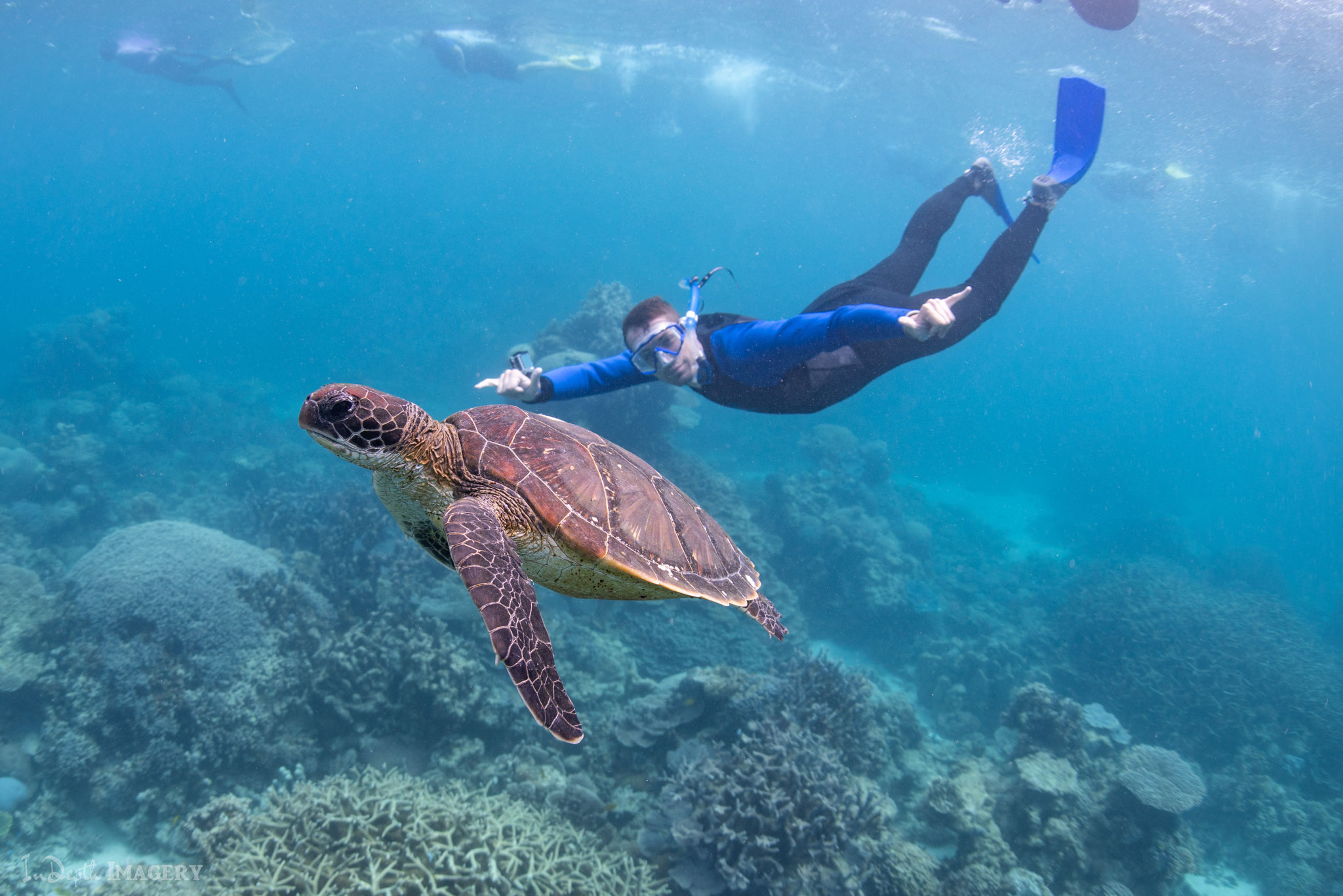 Jochen auf Tauchfühlung mit einer Schildkröte.